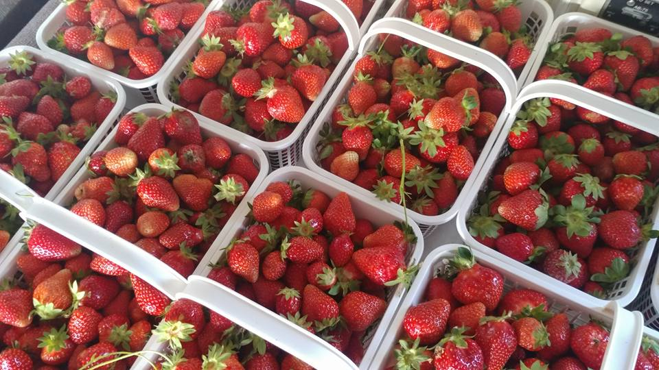 David Lay Strawberries.jpg