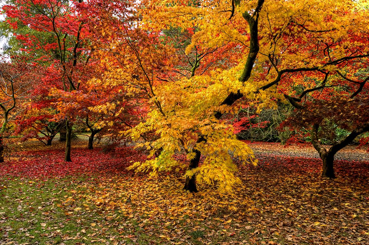 Autumn Palette.jpg