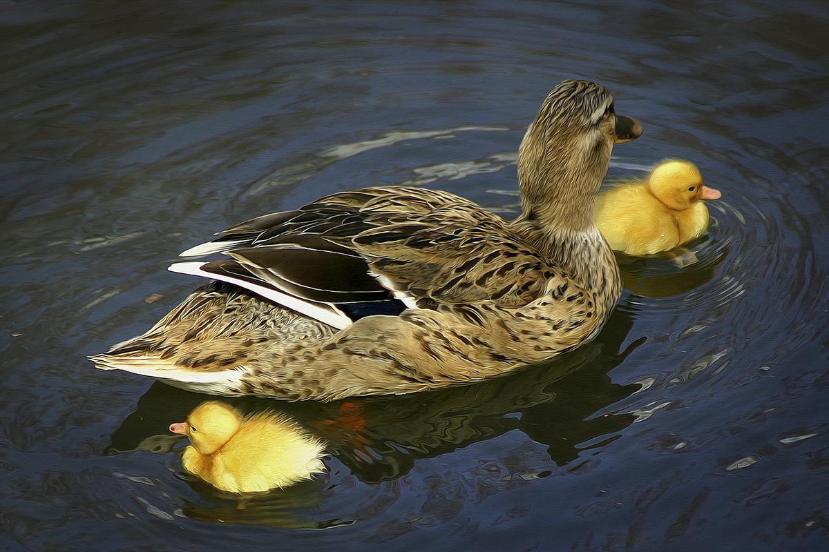 Duck '26 Ducklings.jpg