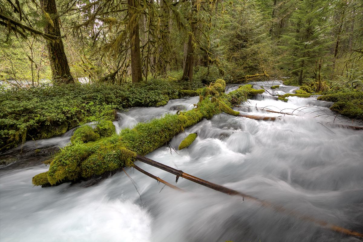 Ollalie Creek2HDRF.jpg