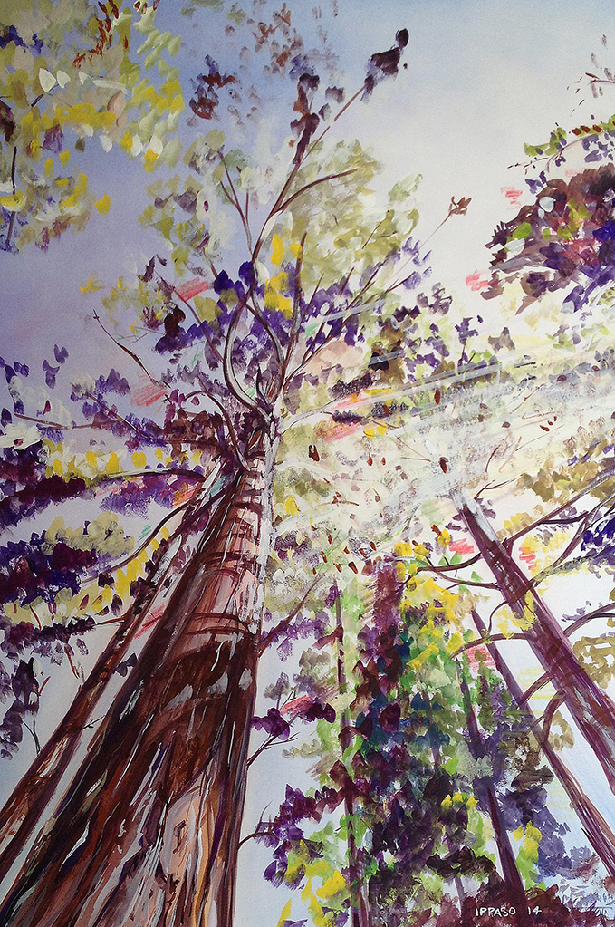 Ippaso-GiantRedwoods_web.jpg