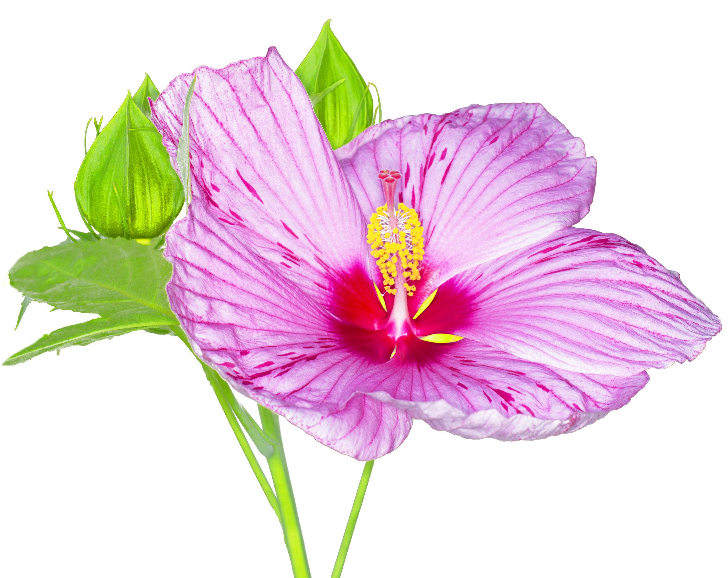 Nissen flower (5).jpg