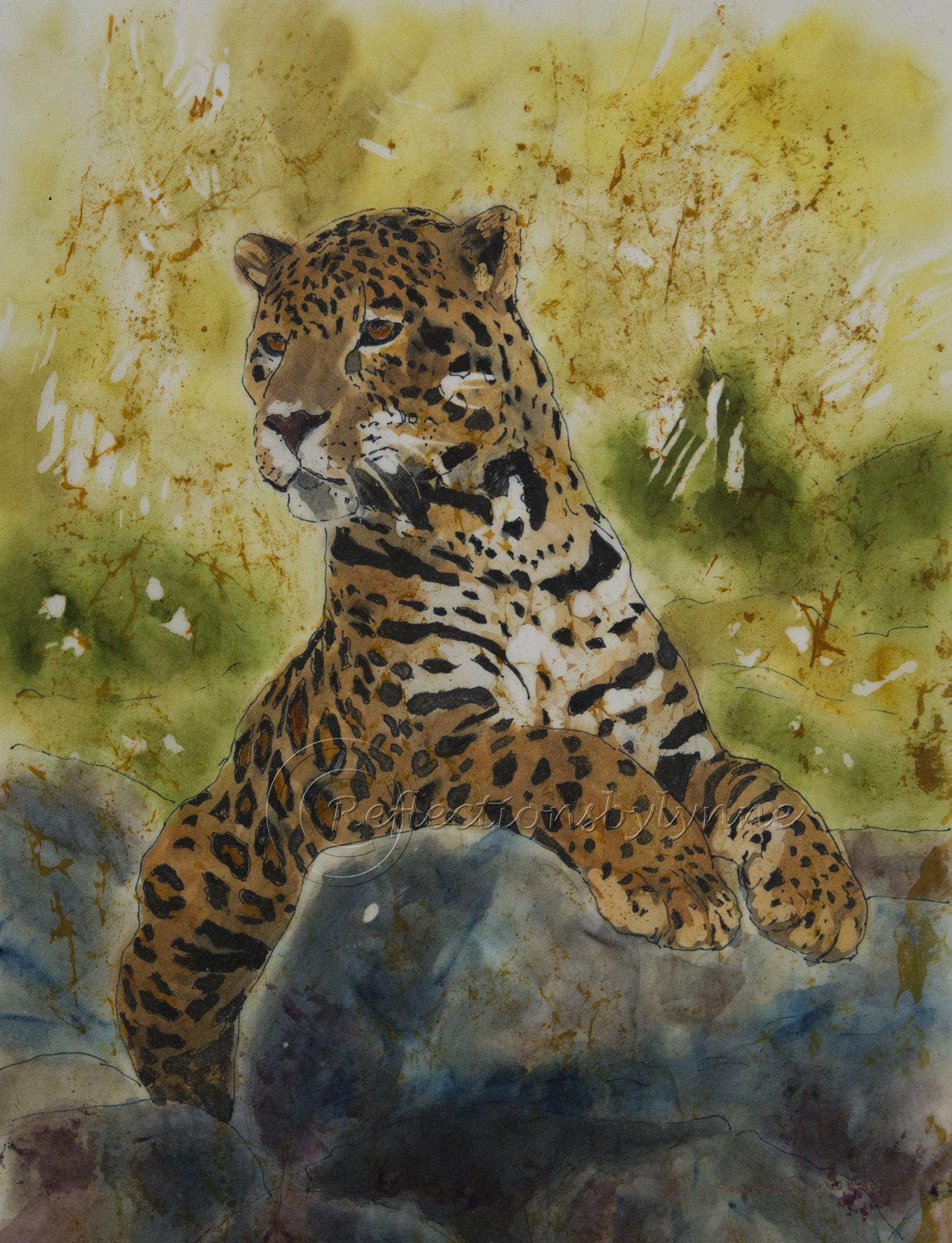 Edwards_Jaguar Beauty.jpg