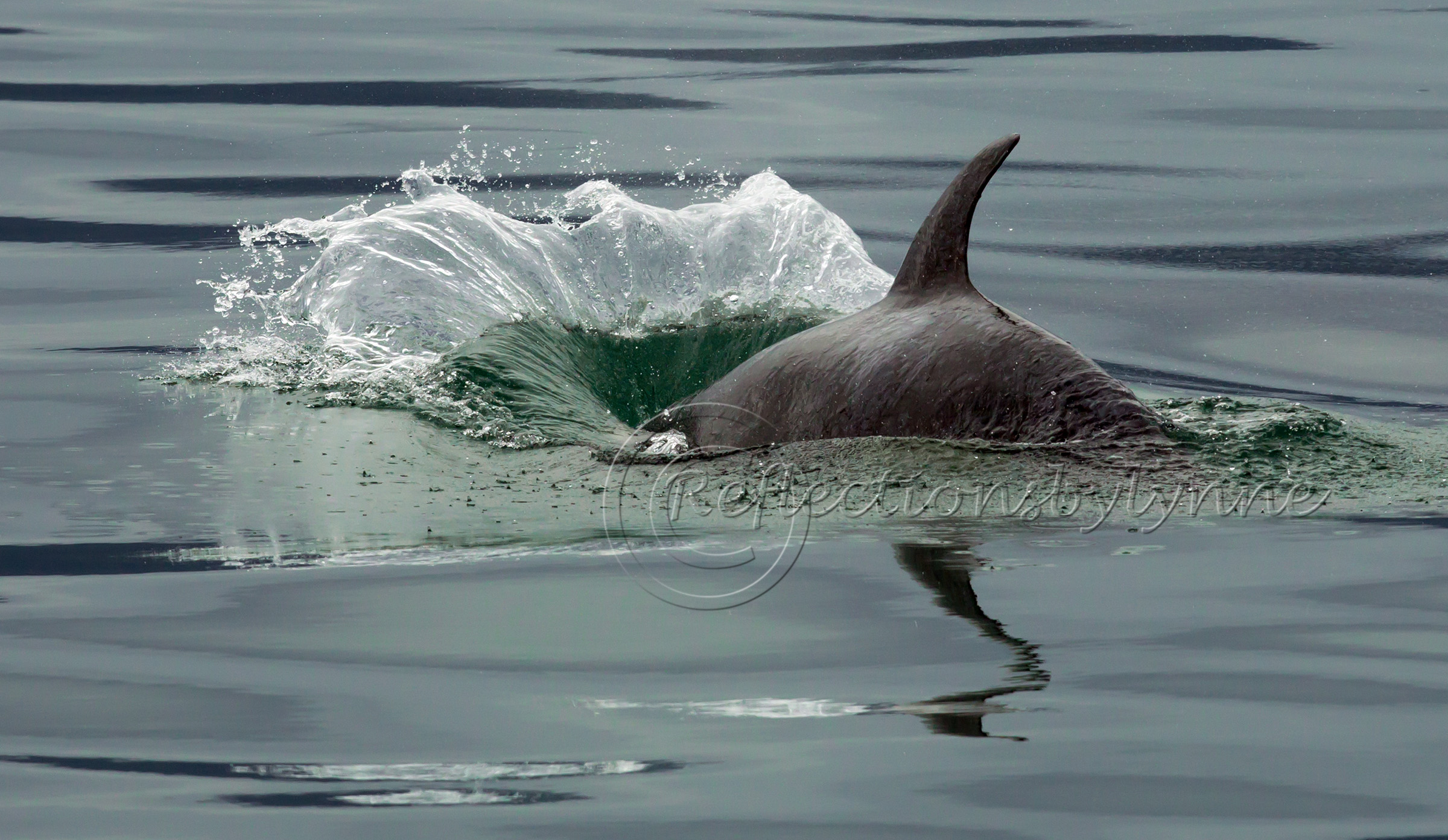 Diving Orca.jpg