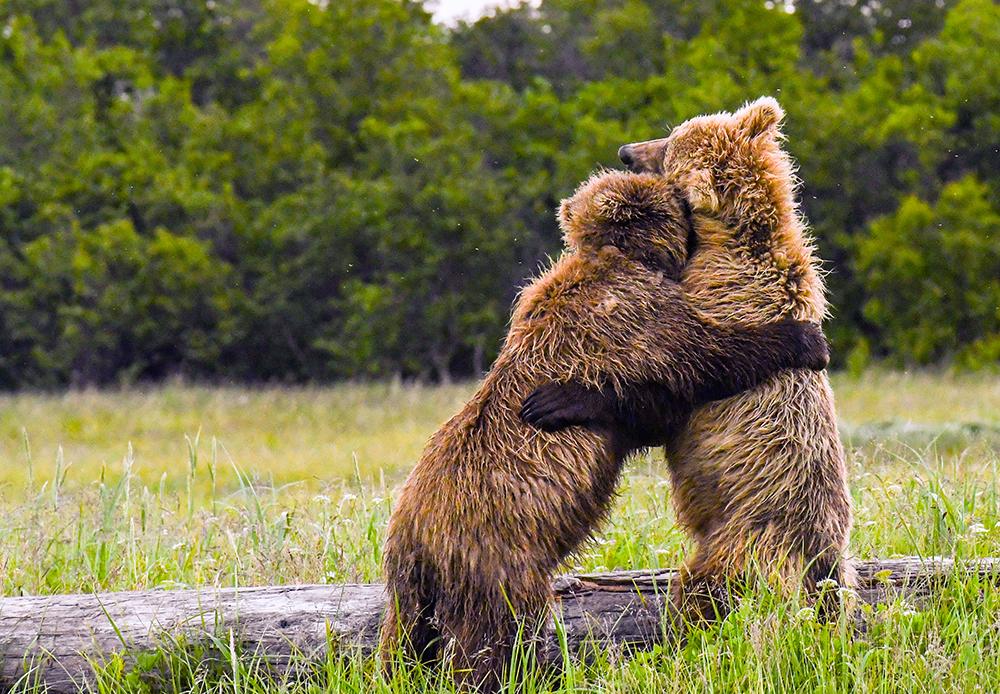 Bielawski_Bear_Hugs_web.jpg