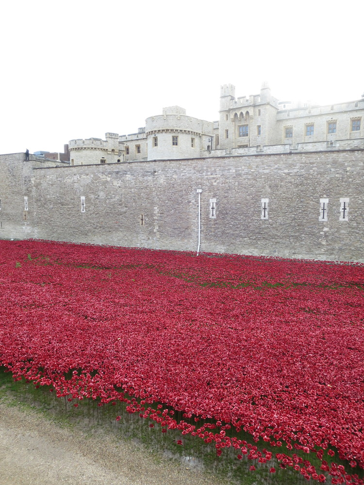 Tower Poppies, a few minutes before 11am on 11th November 2014. Photograph: Anna Wilkins