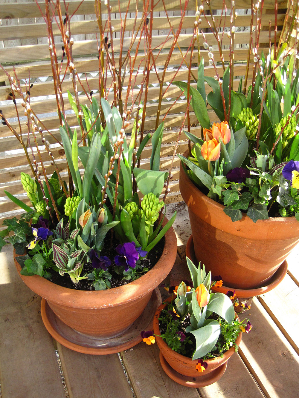 Spring-Containers---03.jpg