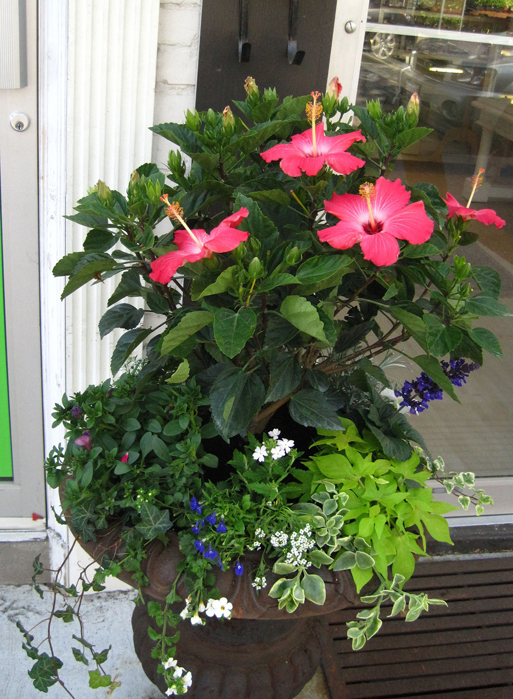Summer-Containers---18.jpg