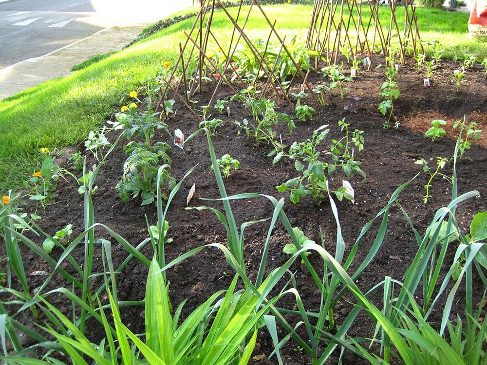 Vegetable-Garden---04.jpg
