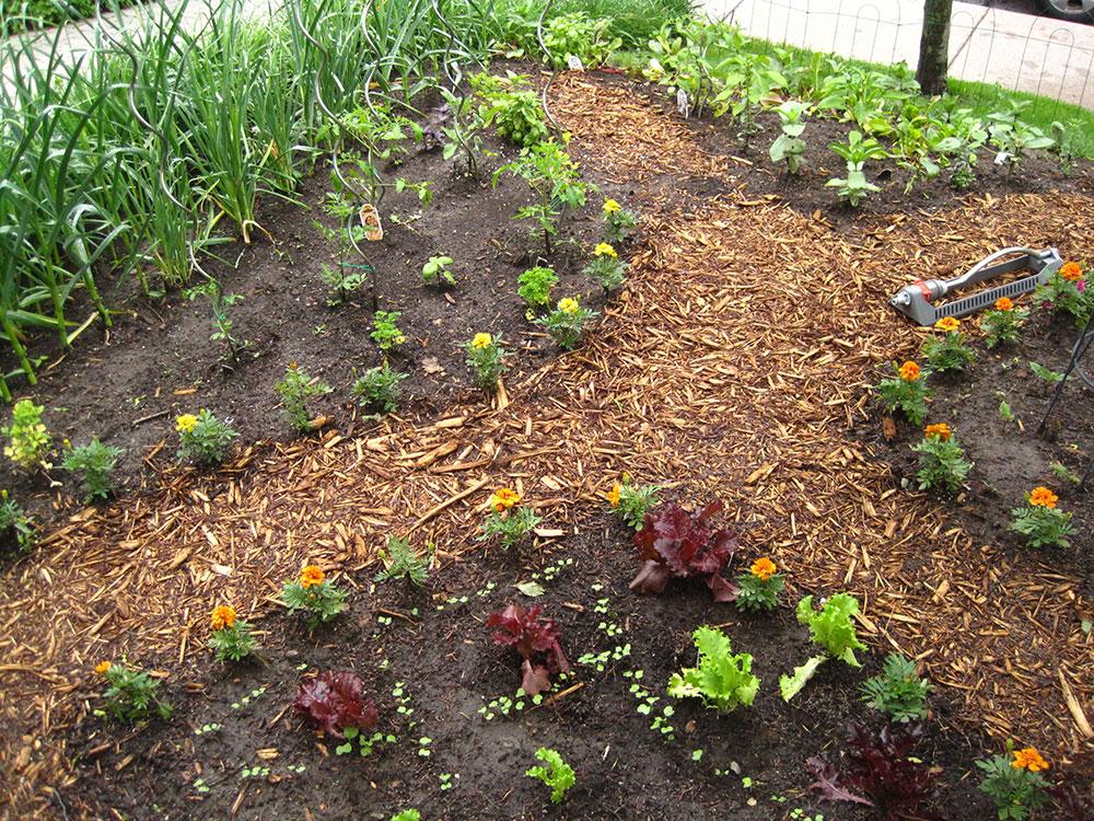 Vegetable-Garden---11.jpg