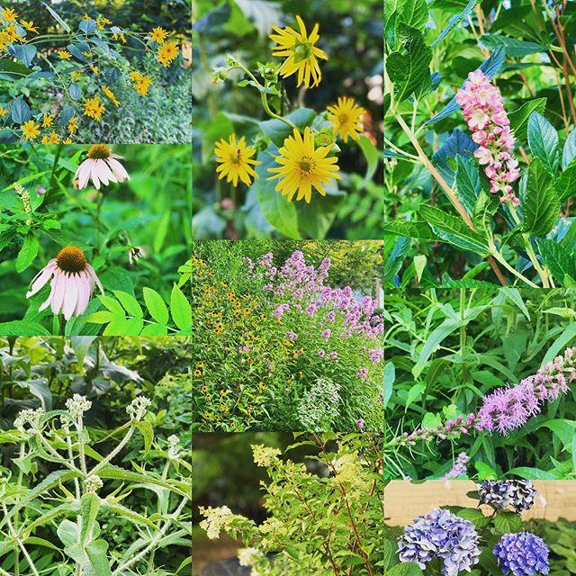#summergarden #frontyard
