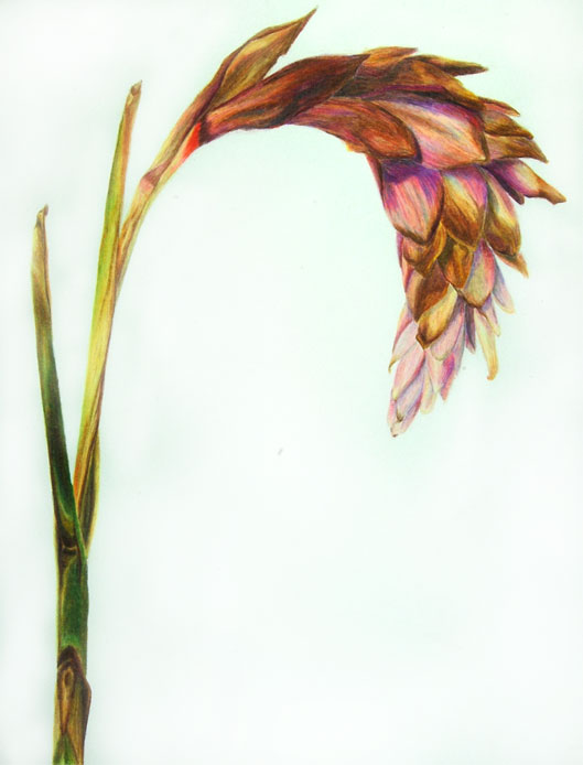 Botanical Study #2
