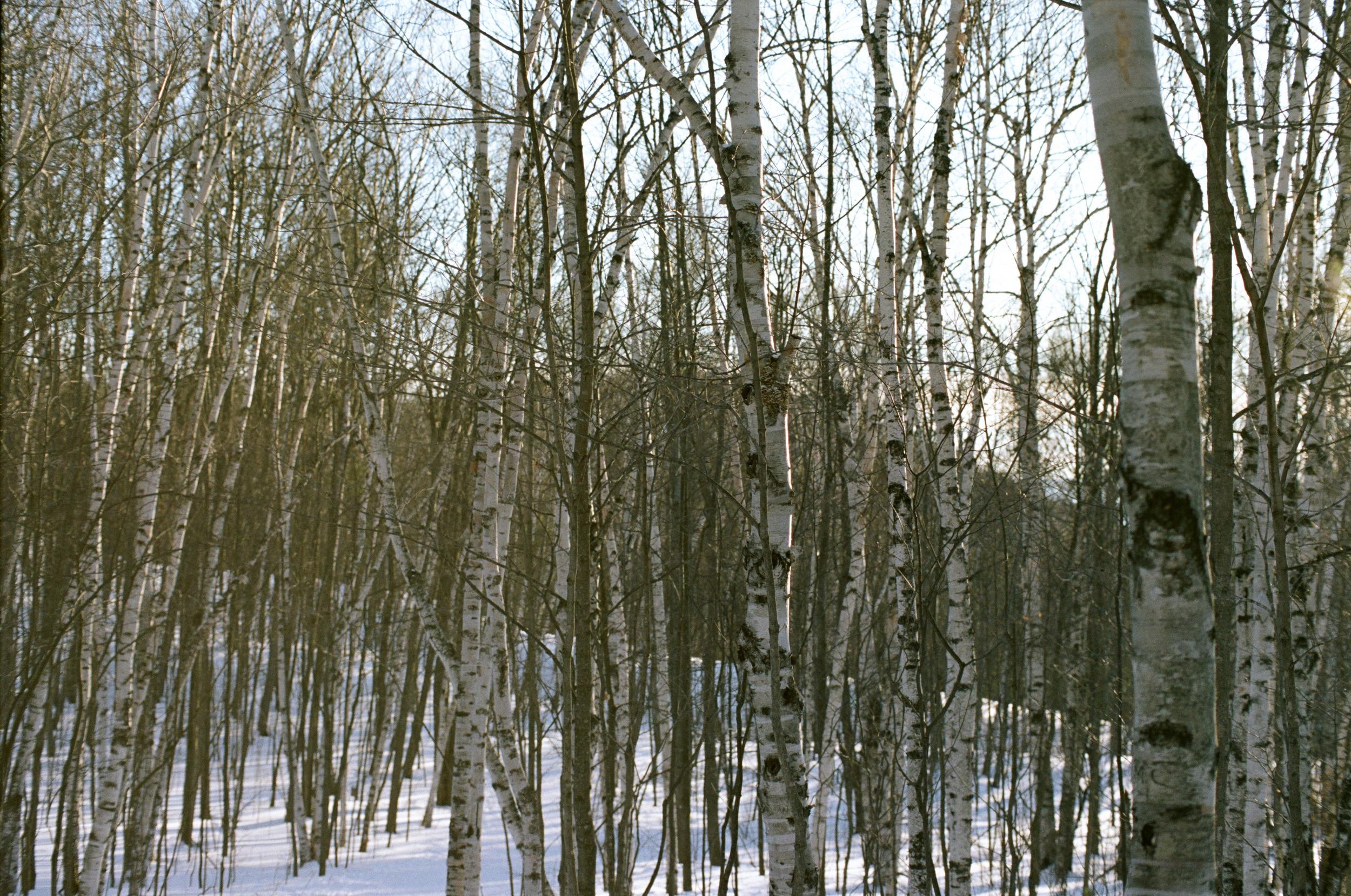 Winter Favorite-8.jpg
