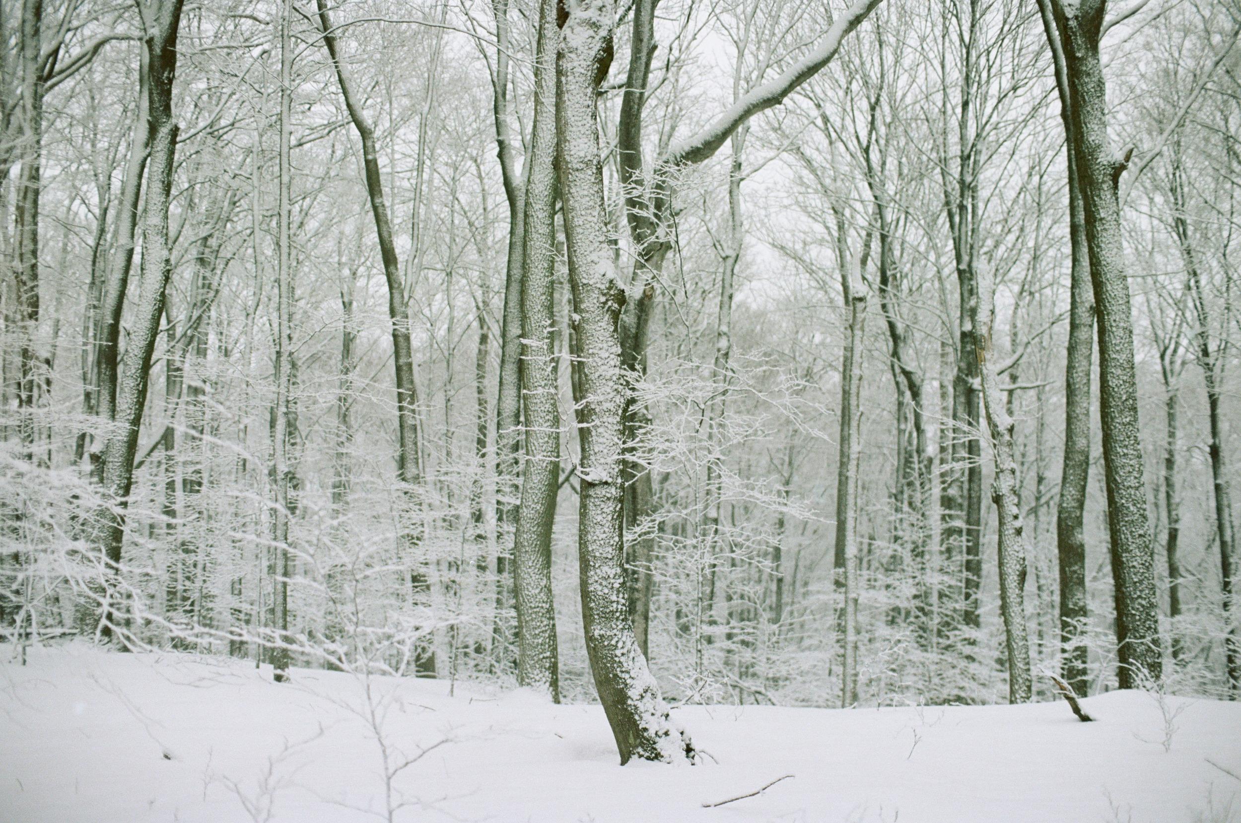 Winter Favorite-25.jpg