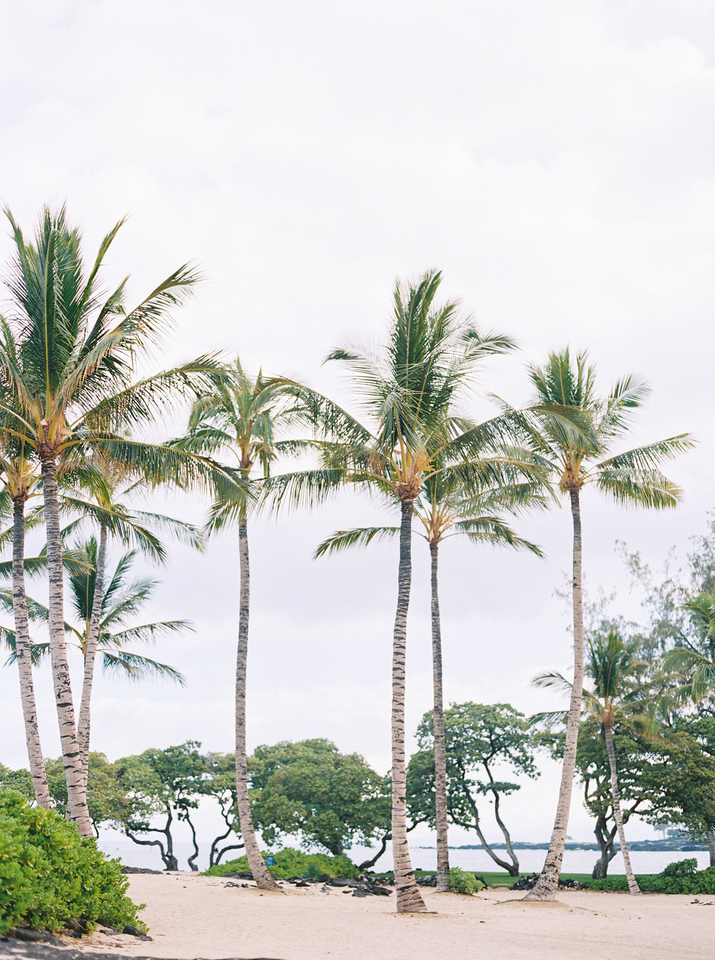 Hawaii Engagement Inspiration from Cottage Hill-2024.jpg