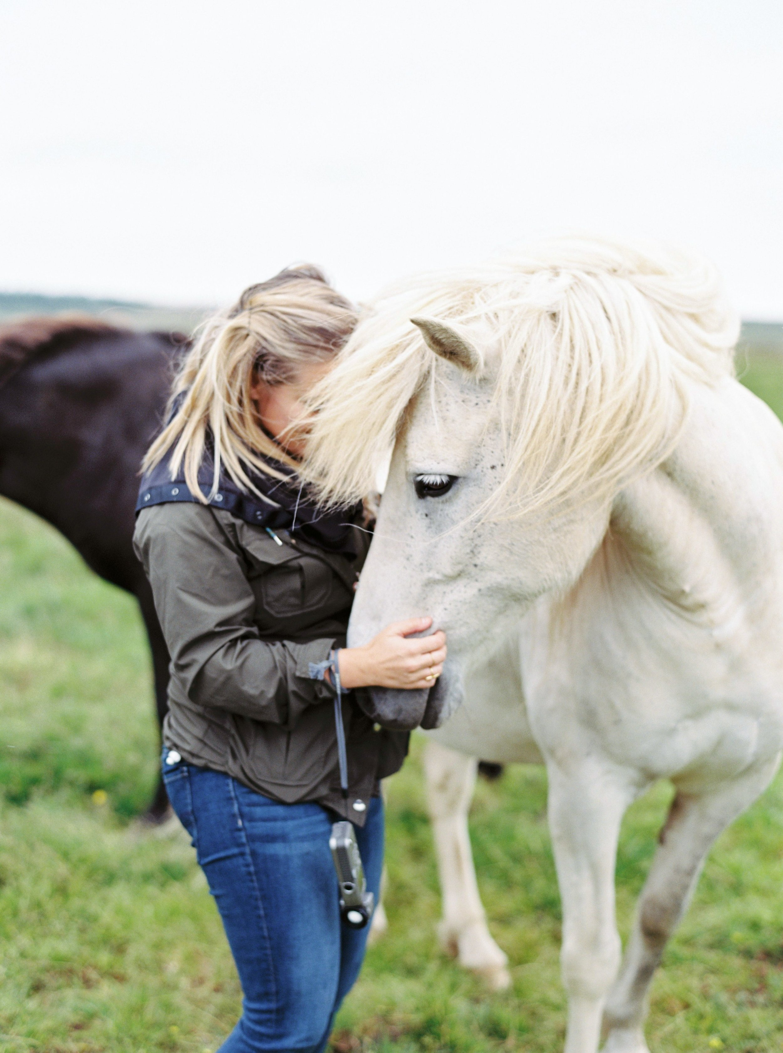 Horses in Iceland by Kristin Sweeting now on Cottage Hill1.jpg