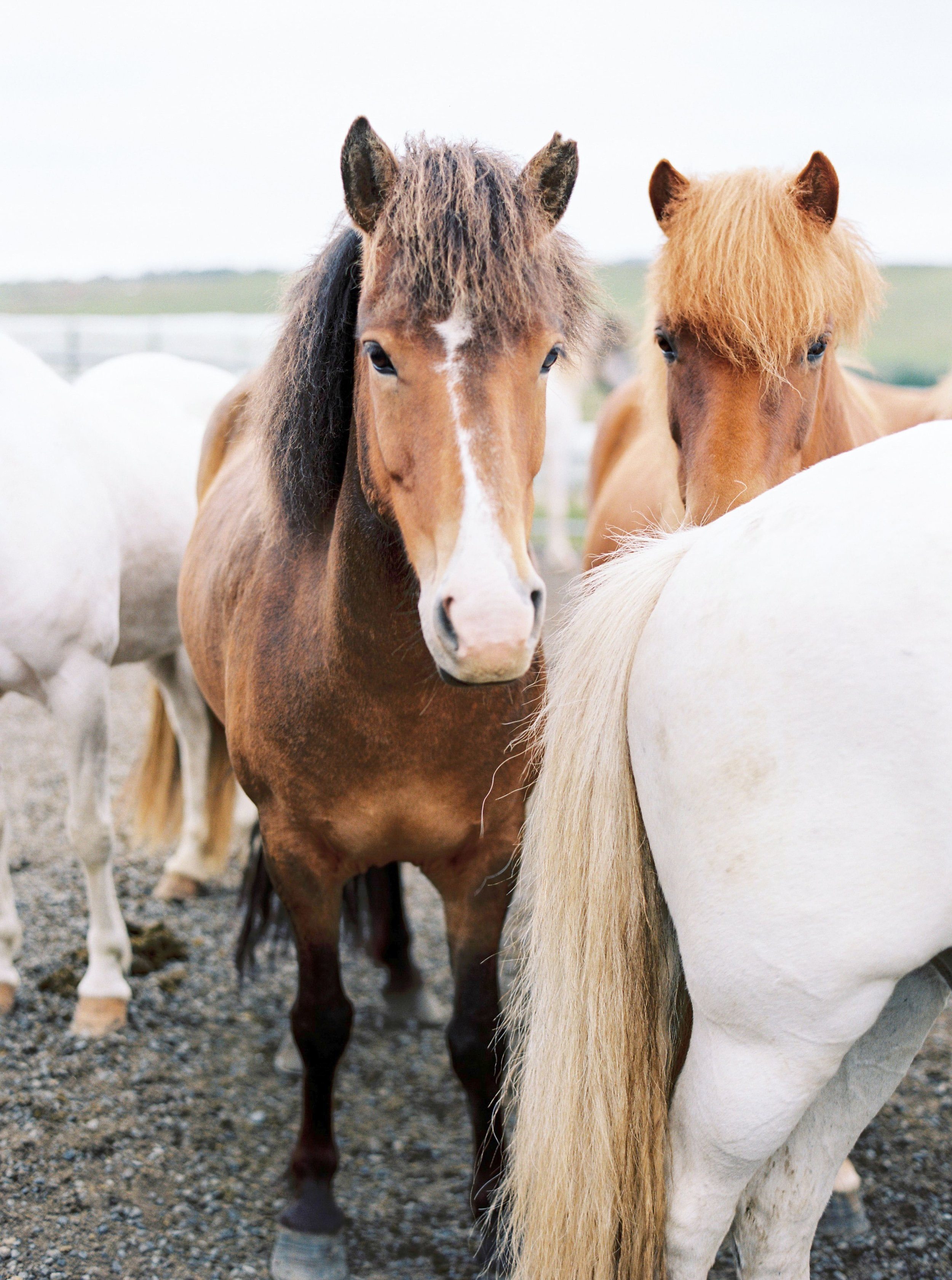 Horses in Iceland by Kristin Sweeting now on Cottage Hill18.jpg