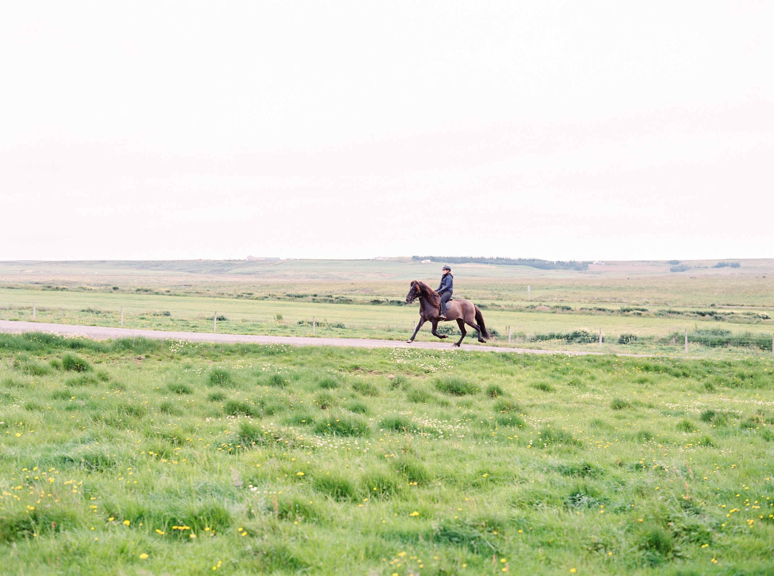 Horses in Iceland by Kristin Sweeting now on Cottage Hill37.jpg