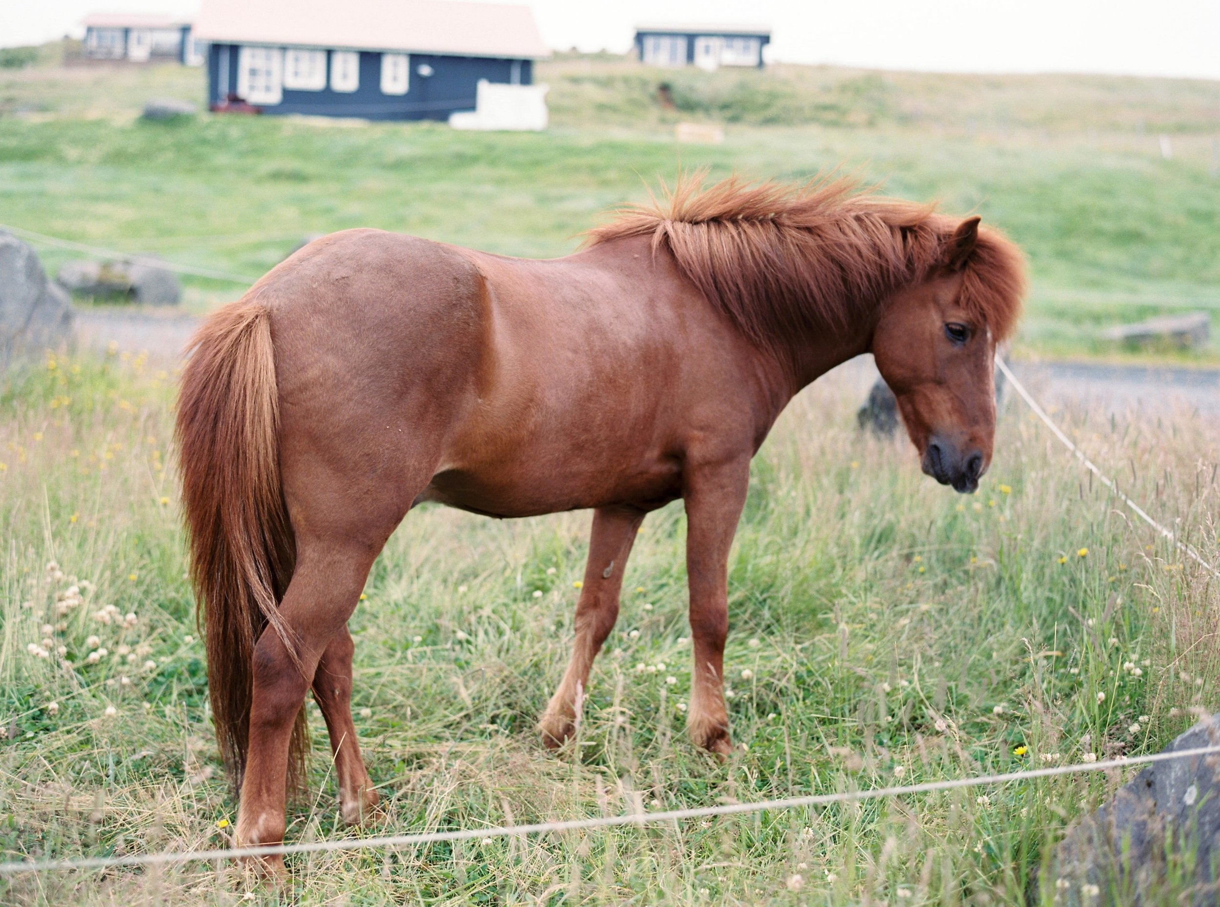 Horses in Iceland by Kristin Sweeting now on Cottage Hill43.jpg