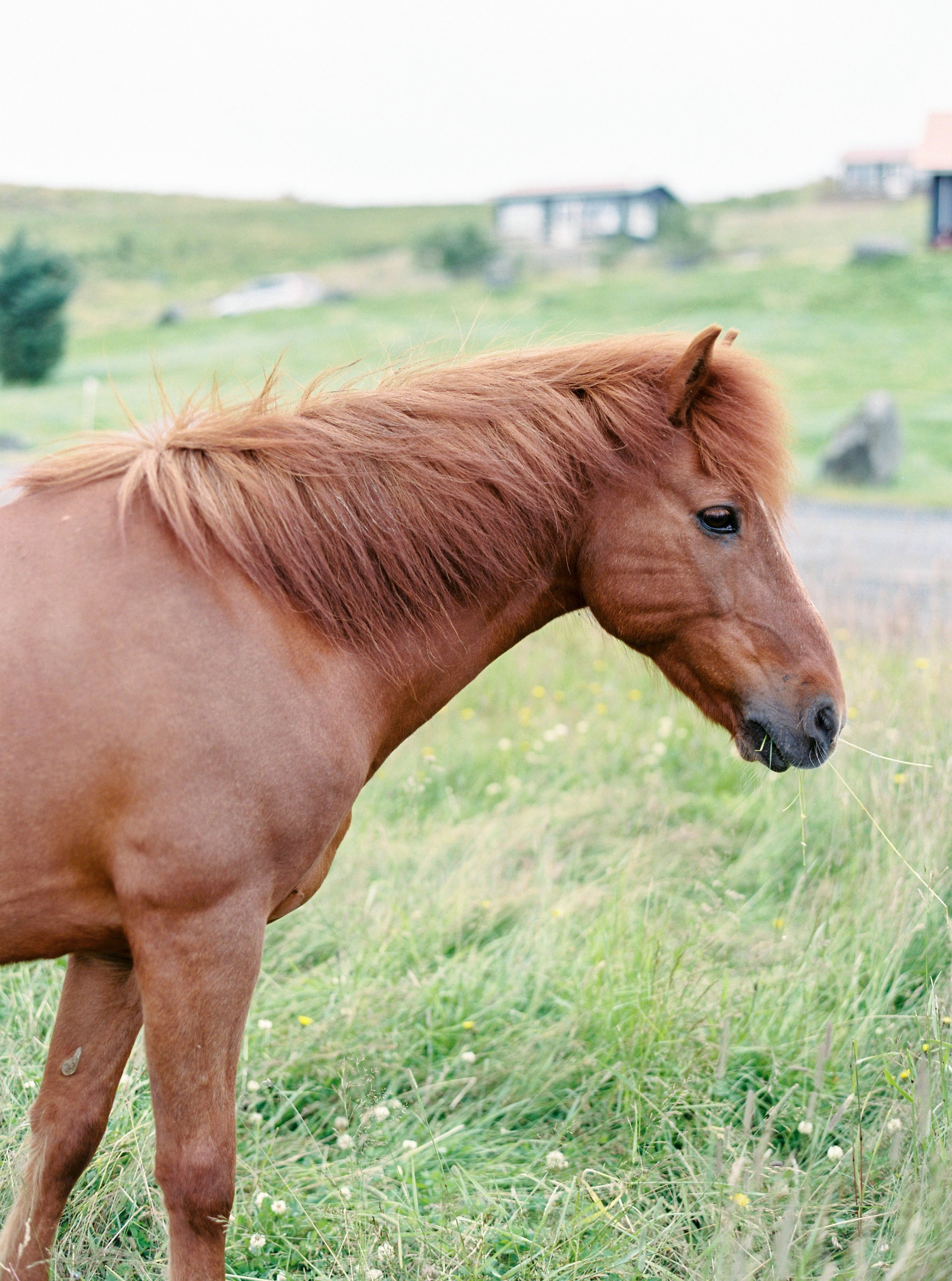 Horses in Iceland by Kristin Sweeting now on Cottage Hill44.jpg
