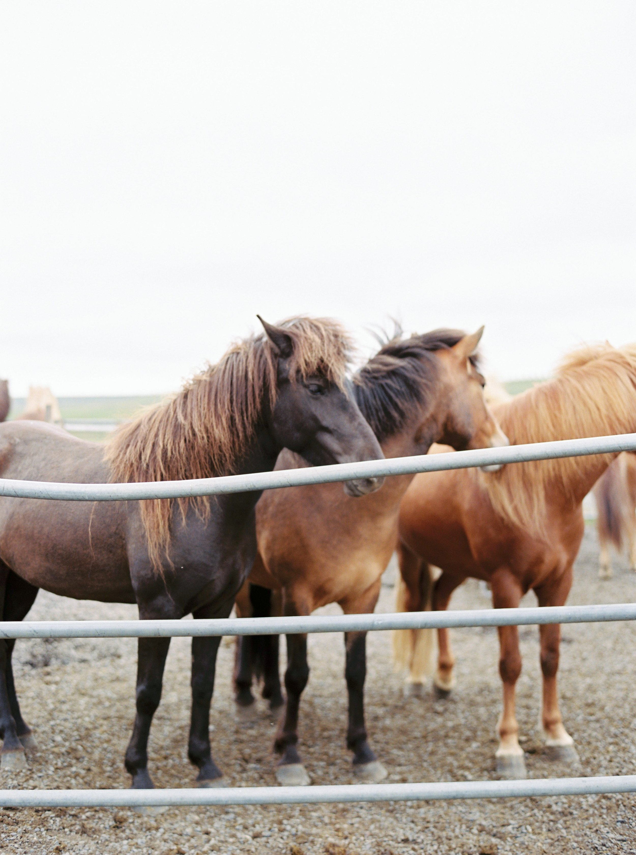 Horses in Iceland by Kristin Sweeting now on Cottage Hill49.jpg