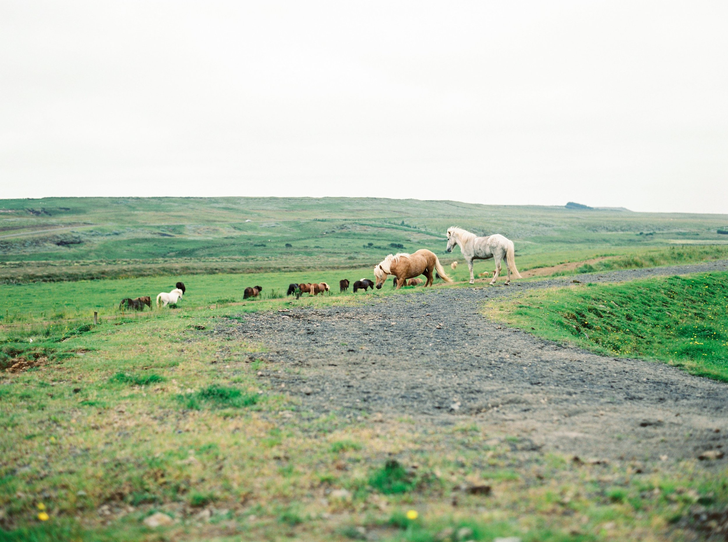 Horses in Iceland by Kristin Sweeting now on Cottage Hill50.jpg