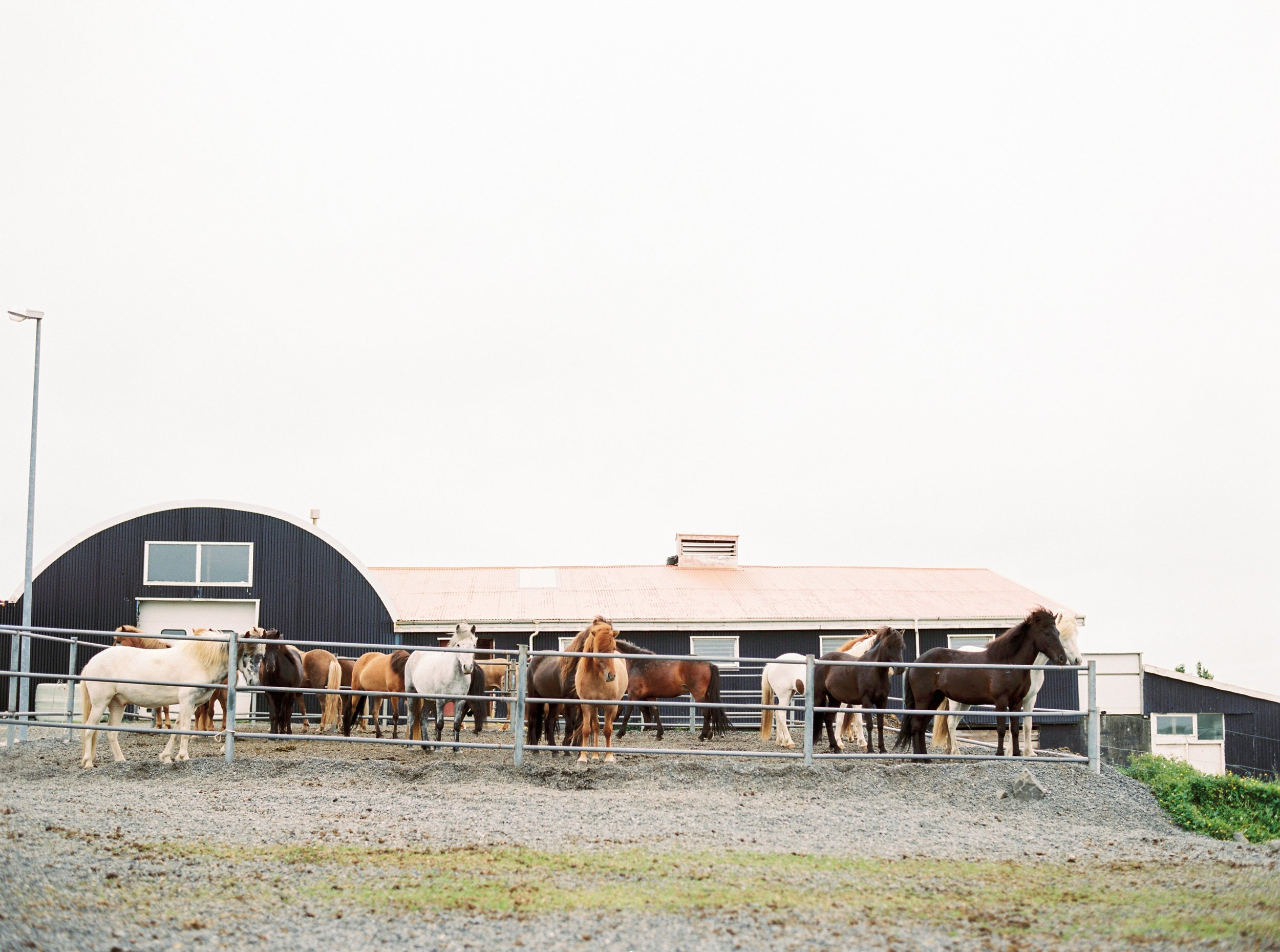 Horses in Iceland by Kristin Sweeting now on Cottage Hill51.jpg
