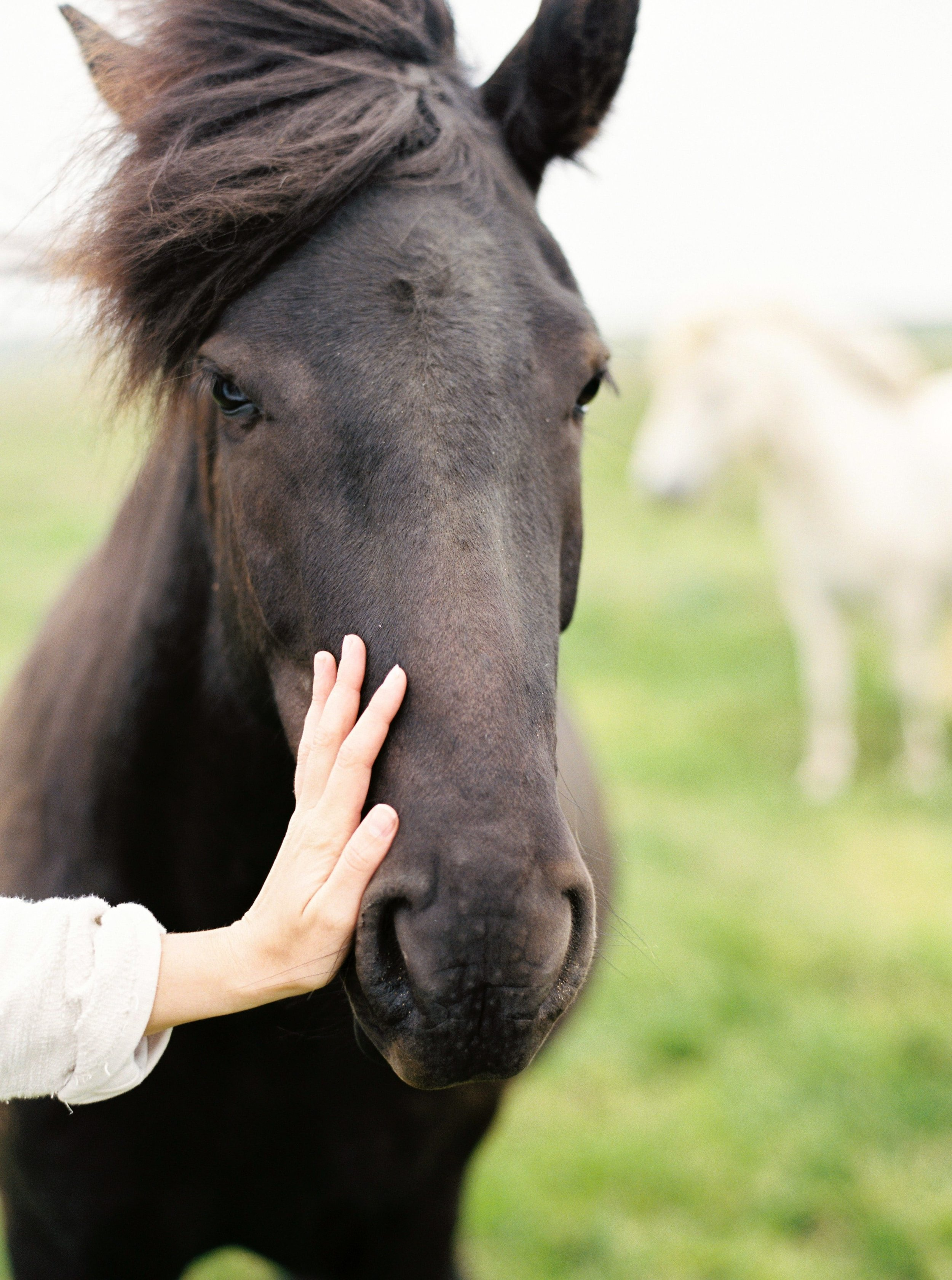 Horses in Iceland by Kristin Sweeting now on Cottage Hill63.jpg