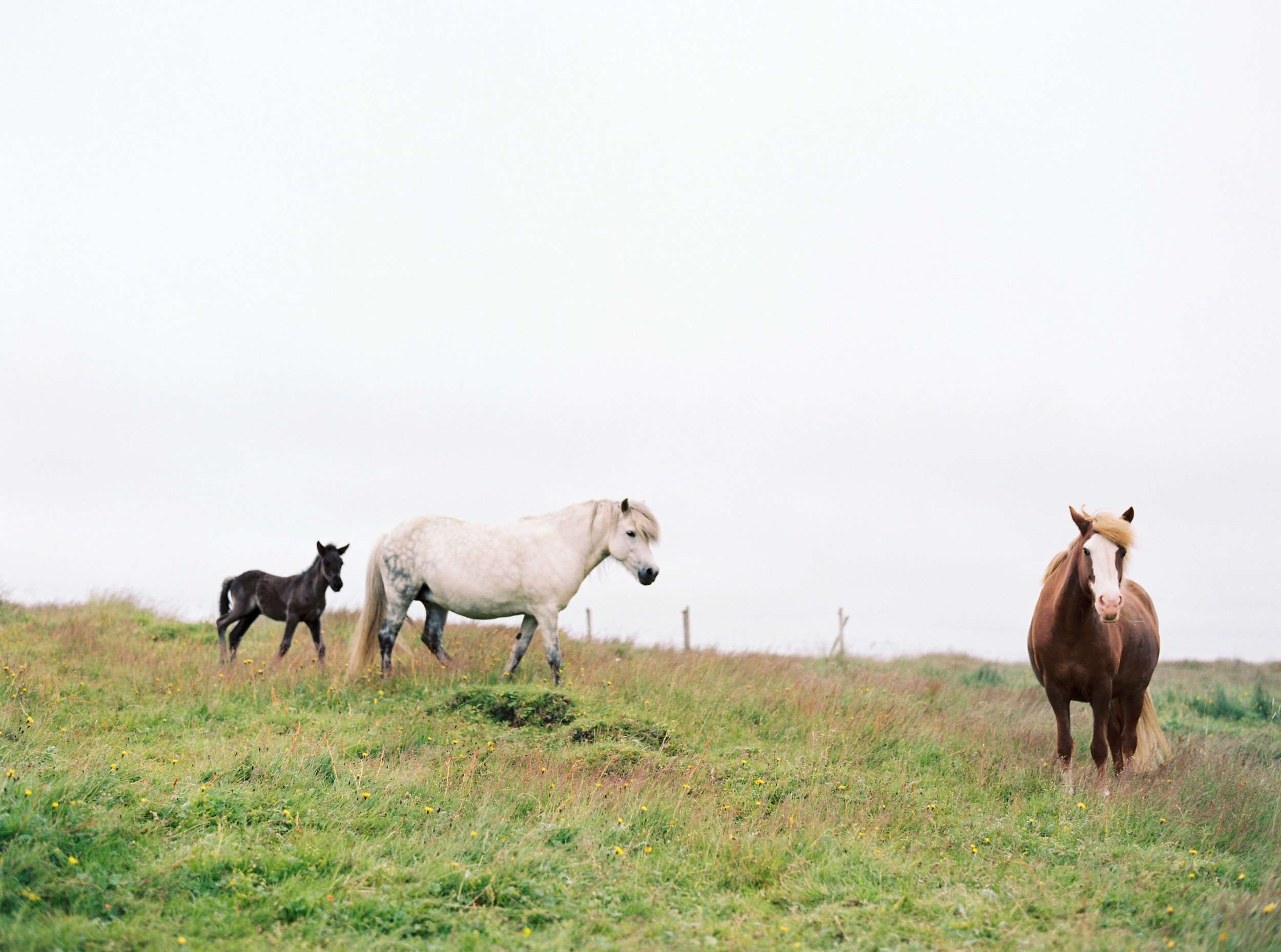 Horses in Iceland by Kristin Sweeting now on Cottage Hill72.jpg