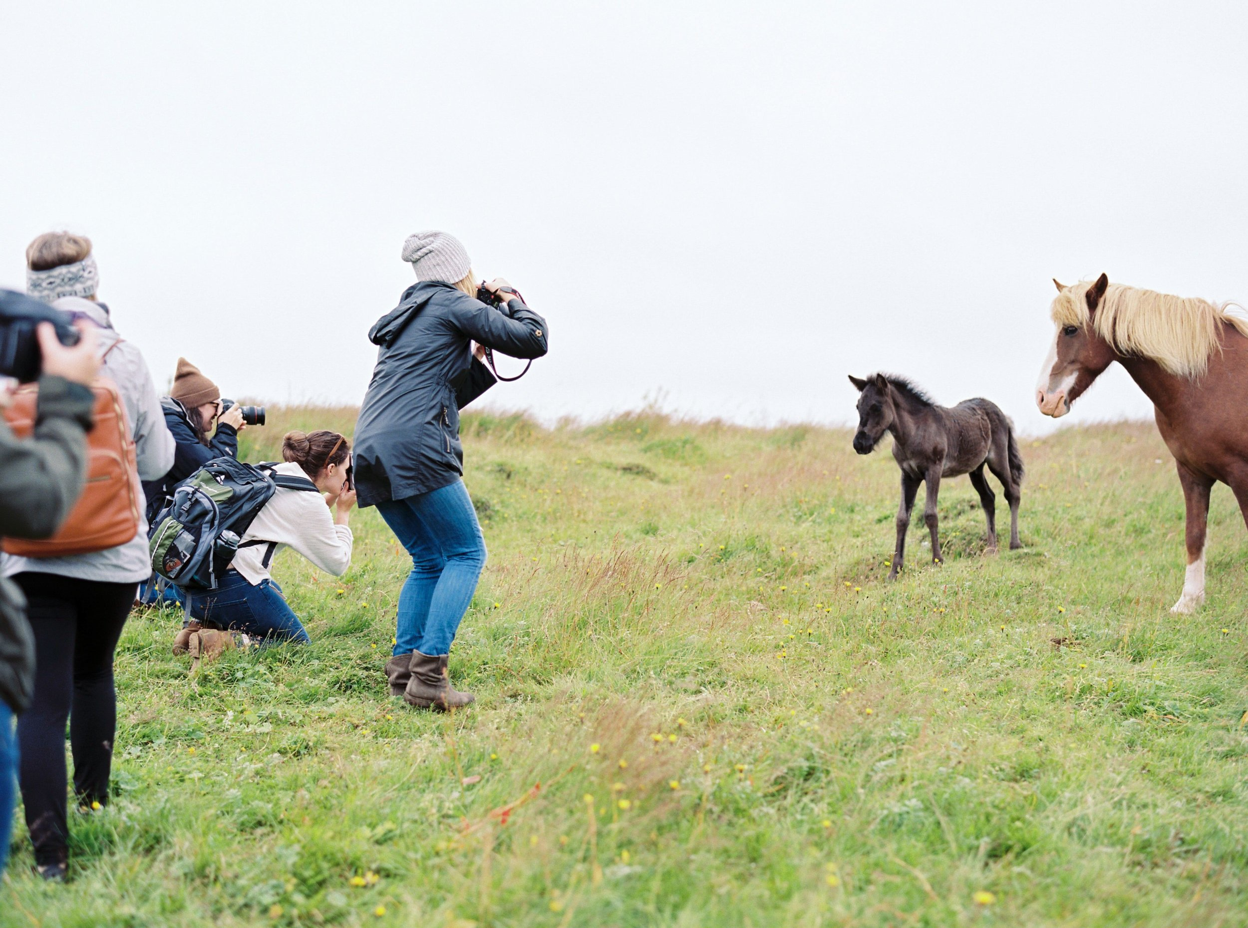 Horses in Iceland by Kristin Sweeting now on Cottage Hill73.jpg