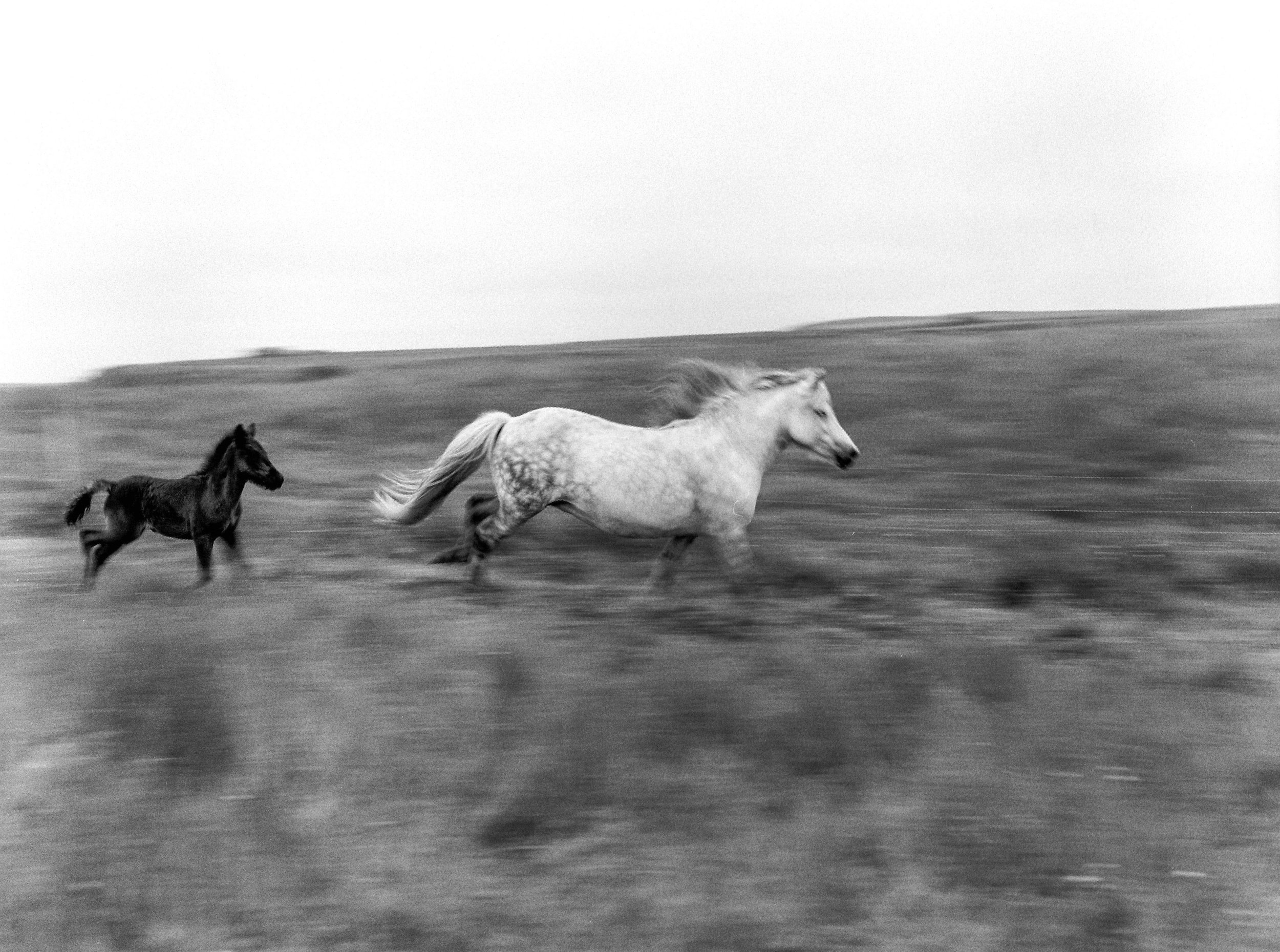 Horses in Iceland by Kristin Sweeting now on Cottage Hill74.jpg