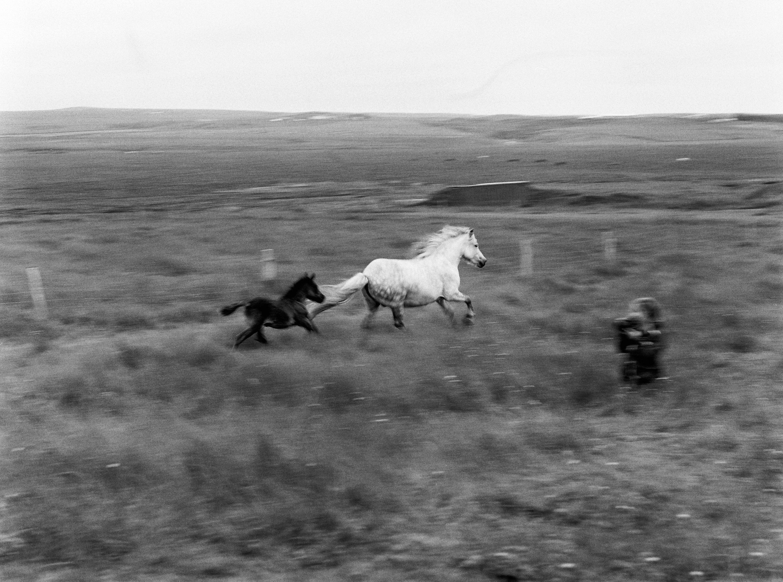 Horses in Iceland by Kristin Sweeting now on Cottage Hill75.jpg