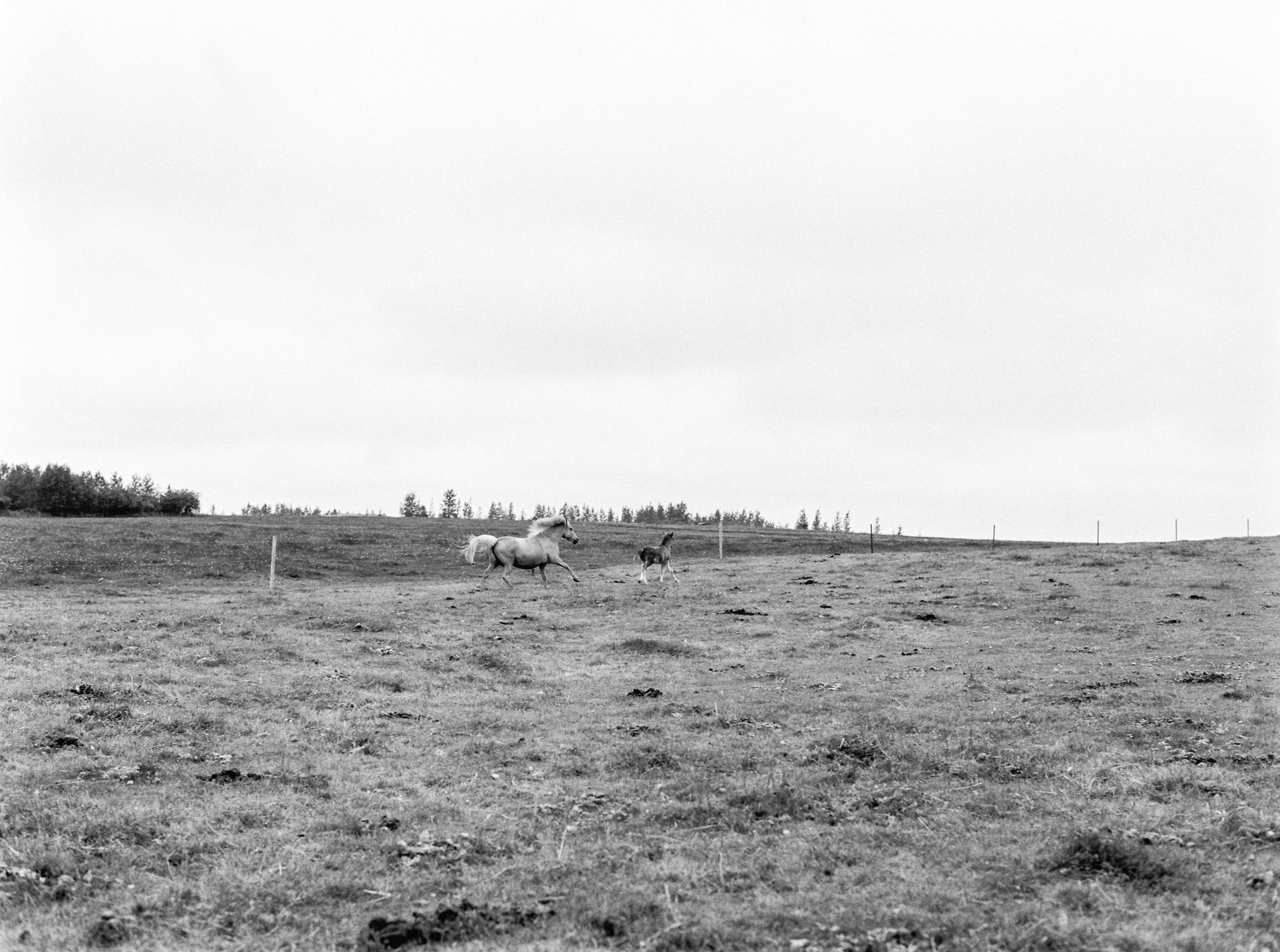 Horses in Iceland by Kristin Sweeting now on Cottage Hill79.jpg