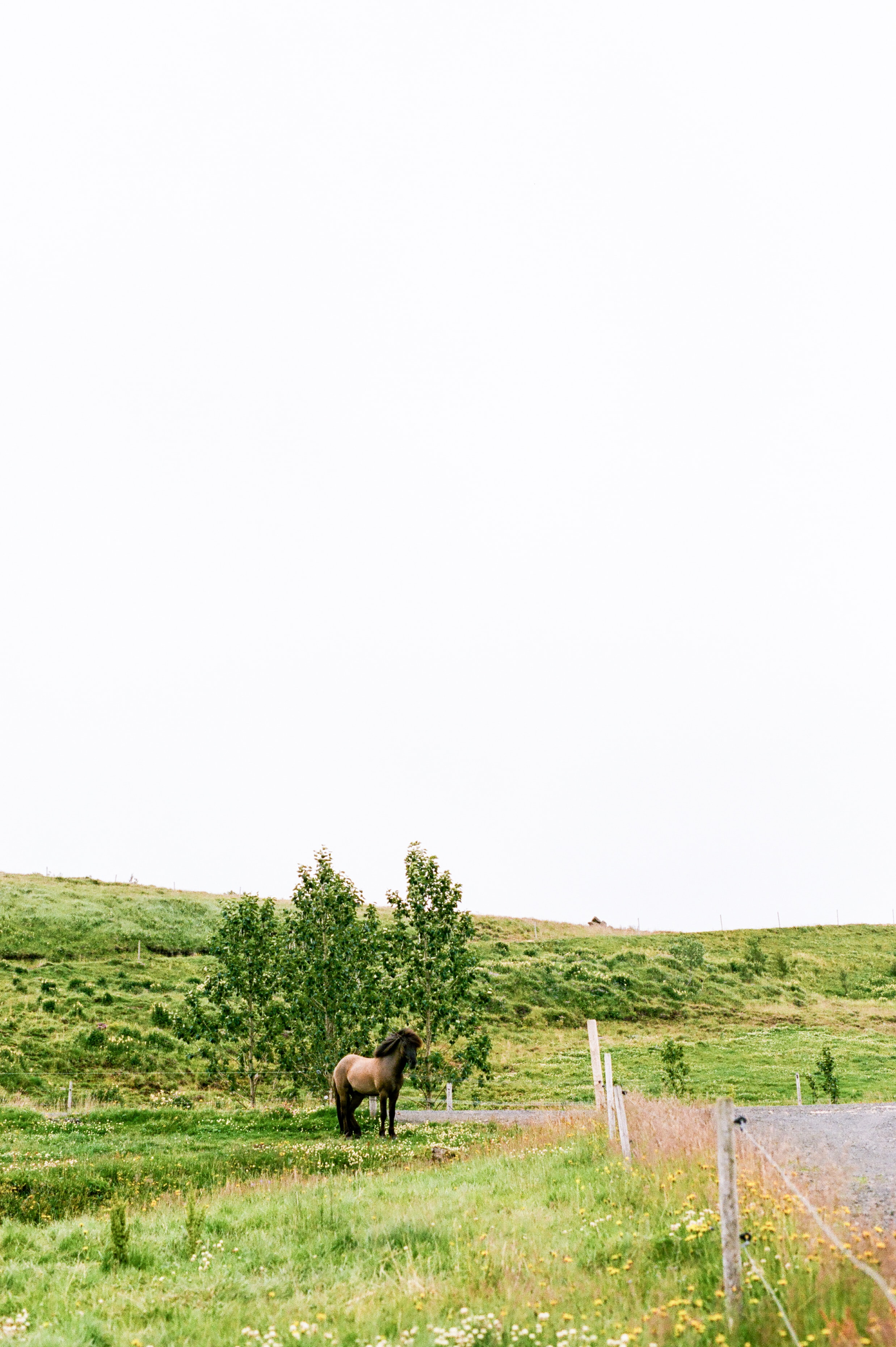 Horses in Iceland by Amilia James now on Cottage Hill6.jpg