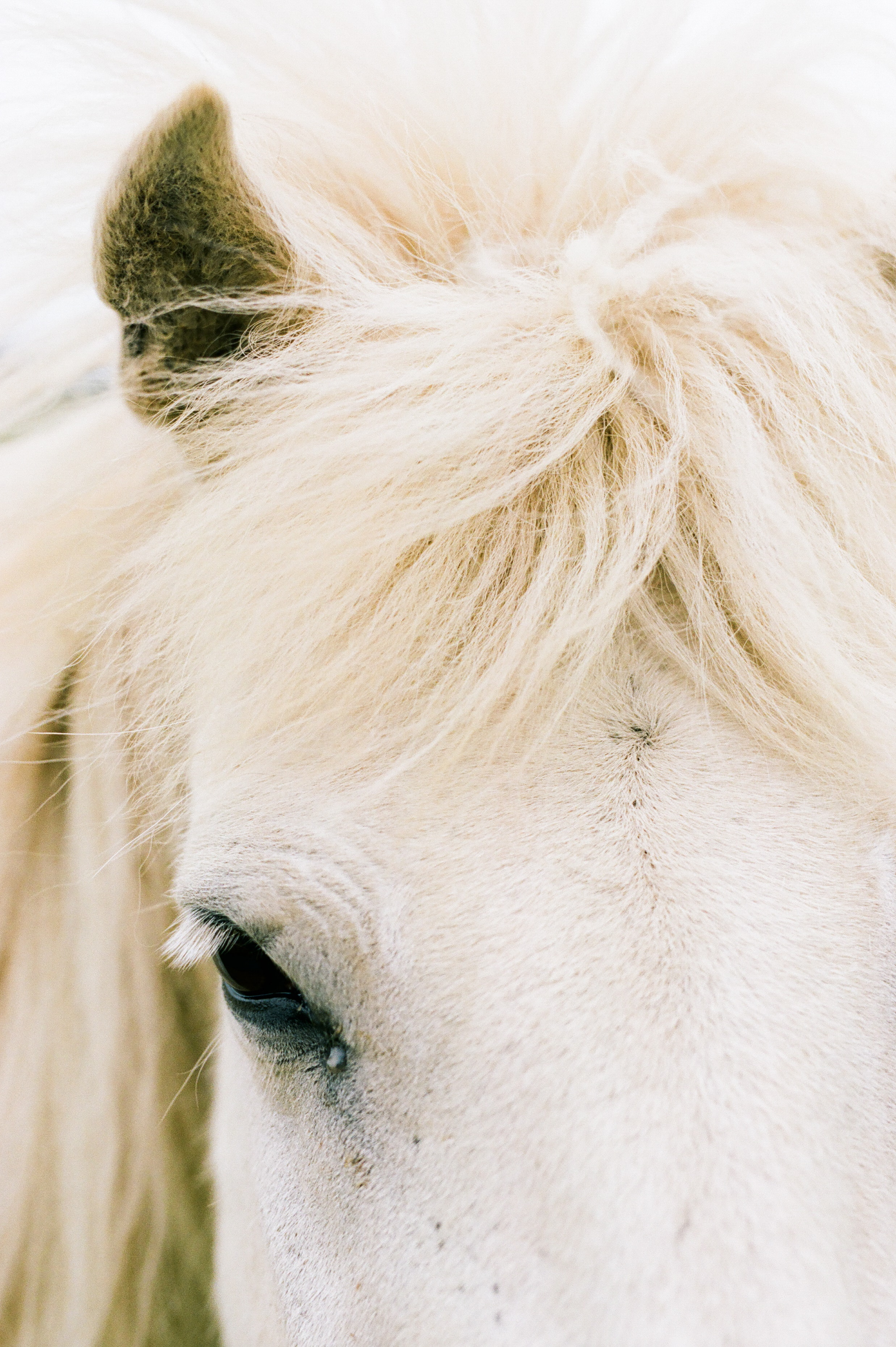 Horses in Iceland by Amilia James now on Cottage Hill9.jpg