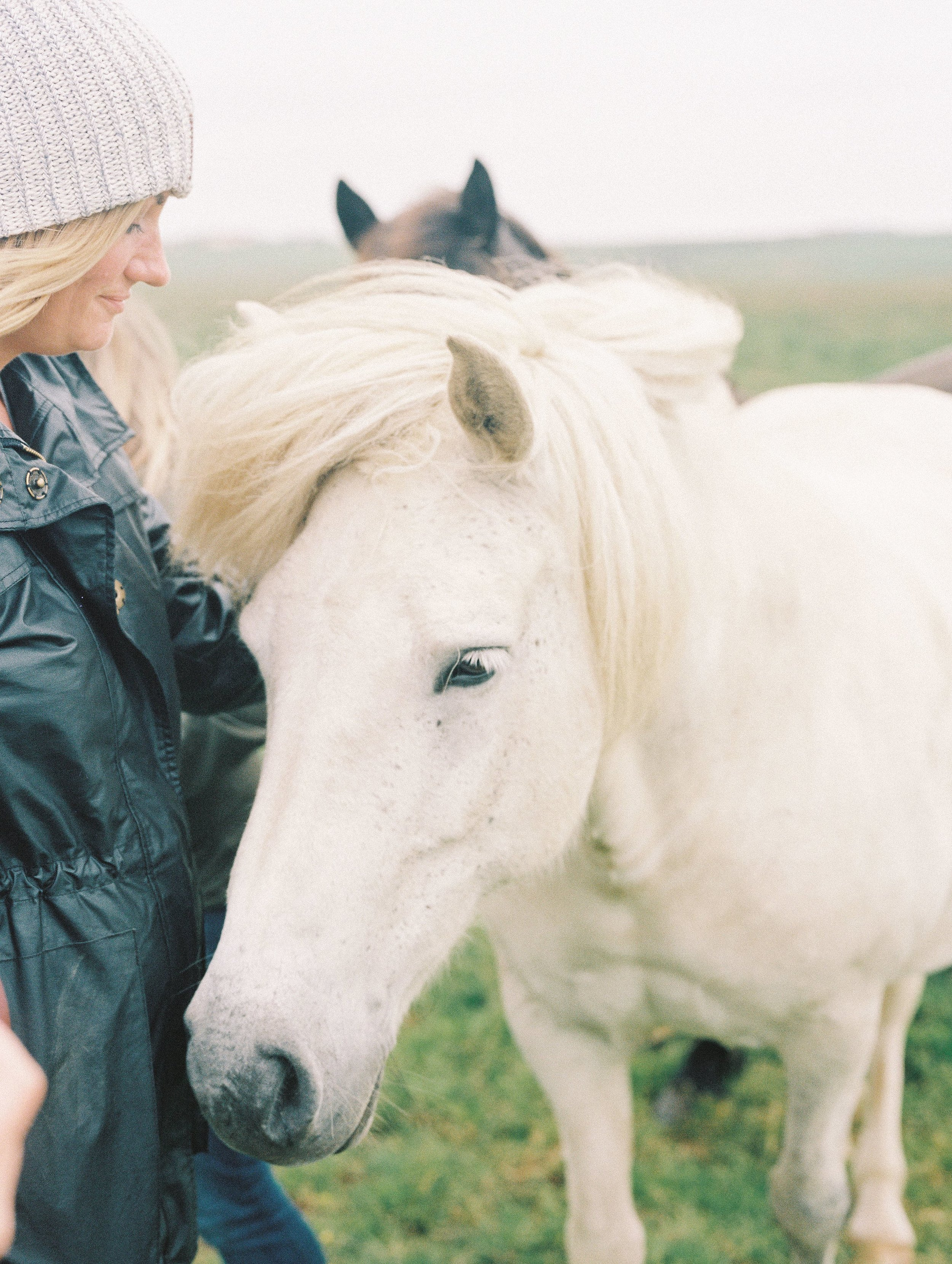 Horses in Iceland by Elli Jane now on Cottage Hill2.jpg