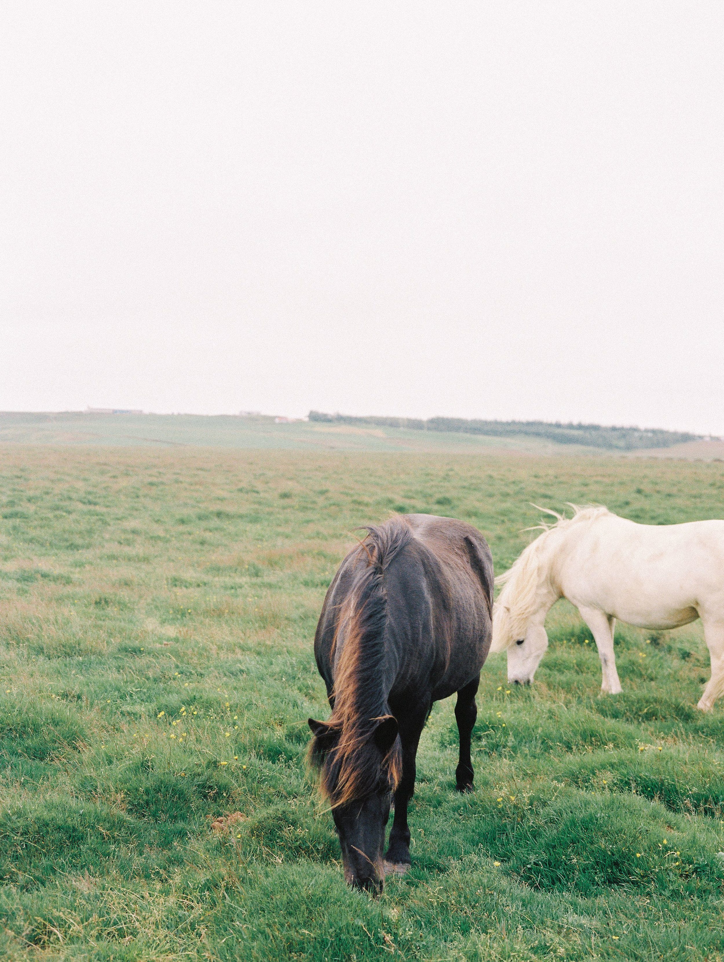 Horses in Iceland by Elli Jane now on Cottage Hill5.jpg