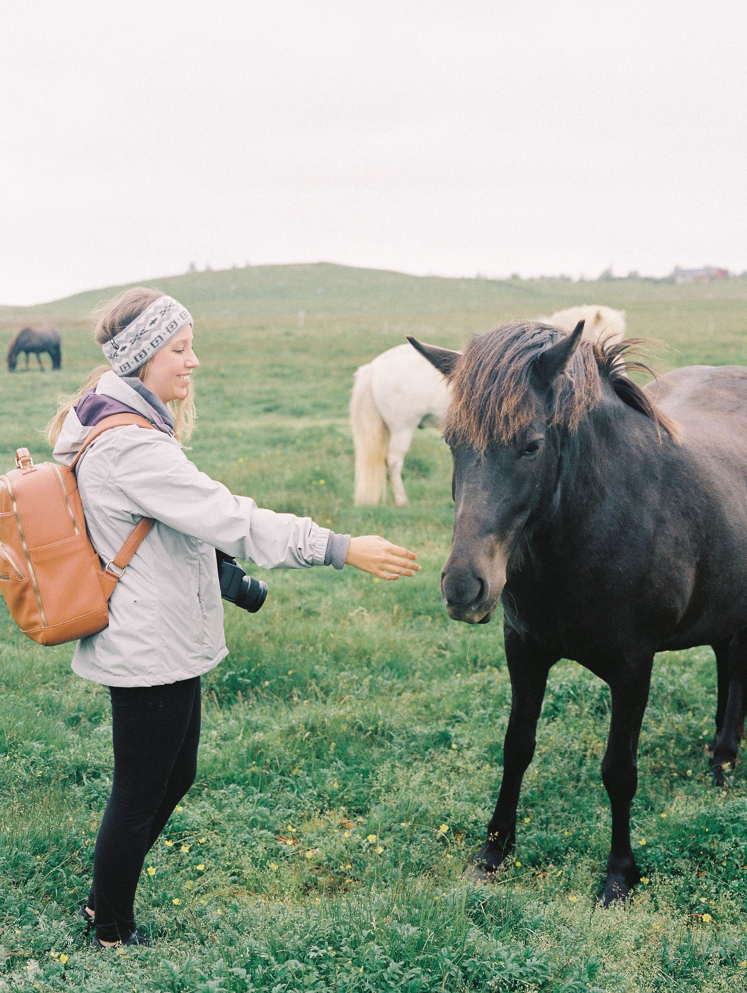 Horses in Iceland by Elli Jane now on Cottage Hill7.jpg