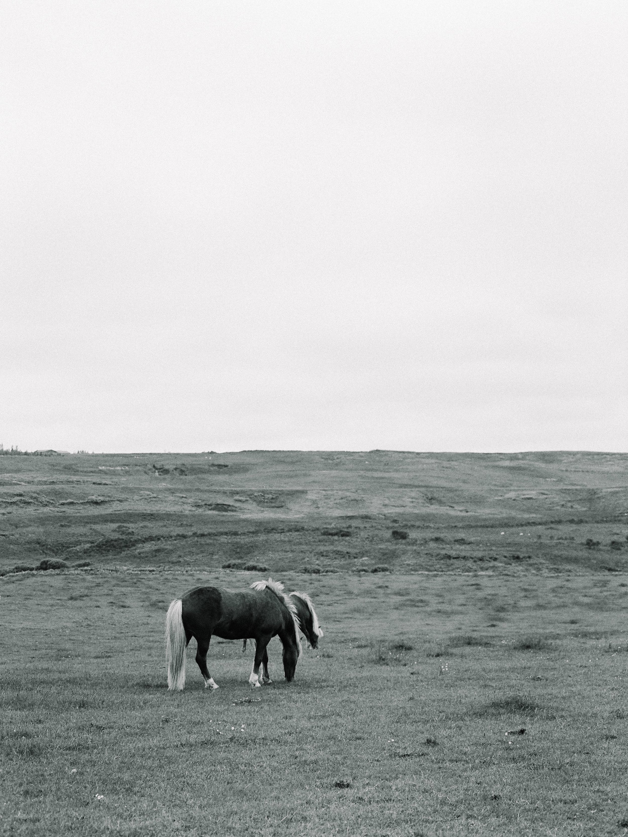 Horses in Iceland by Elli Jane now on Cottage Hill10.jpg