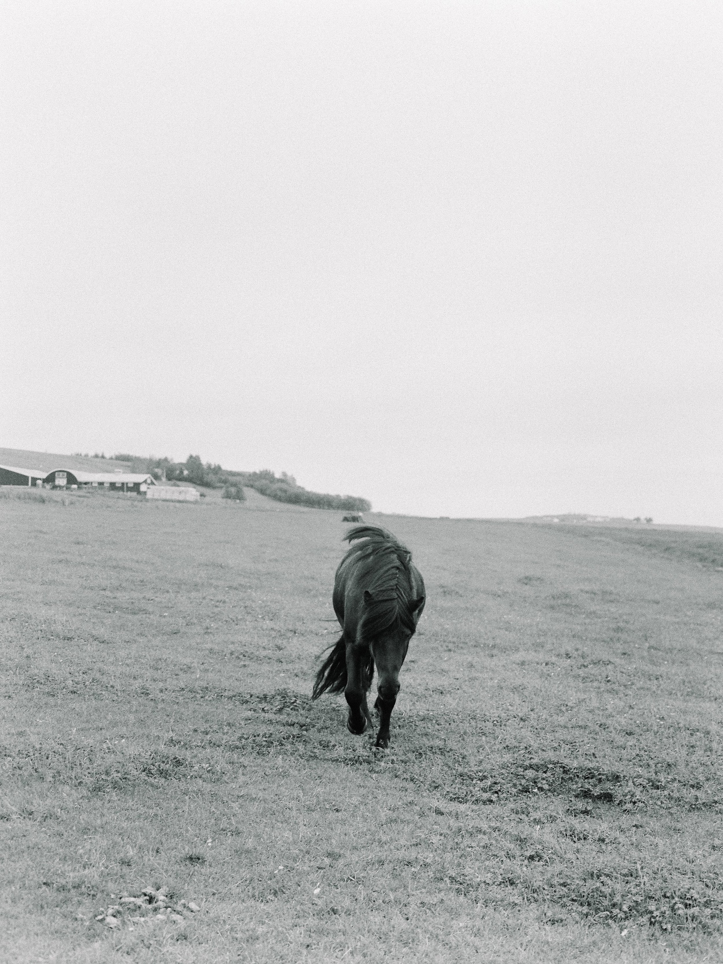 Horses in Iceland by Elli Jane now on Cottage Hill14.jpg