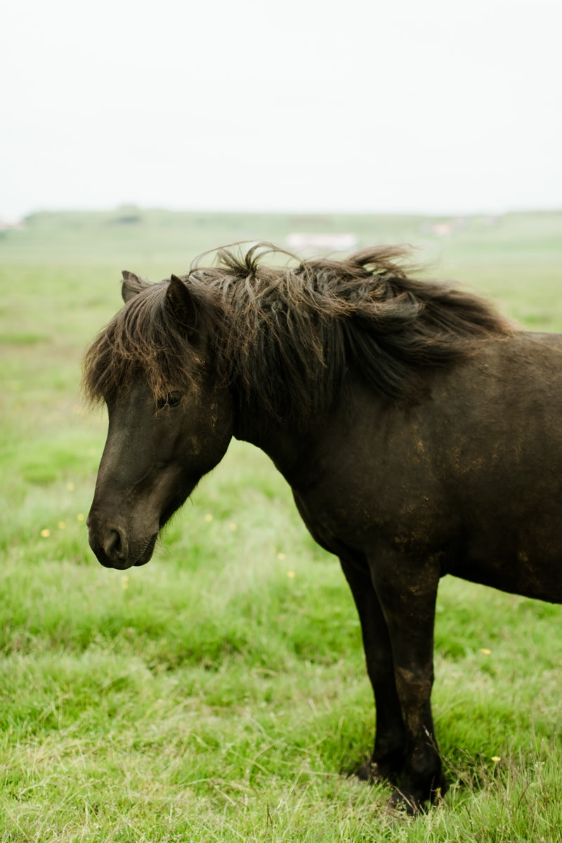 Horses in Iceland by Abigail Lauren now on Cottage Hill5.jpg