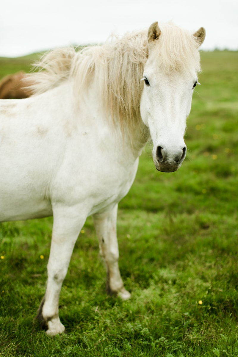 Horses in Iceland by Abigail Lauren now on Cottage Hill17.jpg