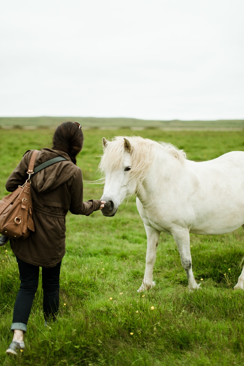 Horses in Iceland by Abigail Lauren now on Cottage Hill18.jpg