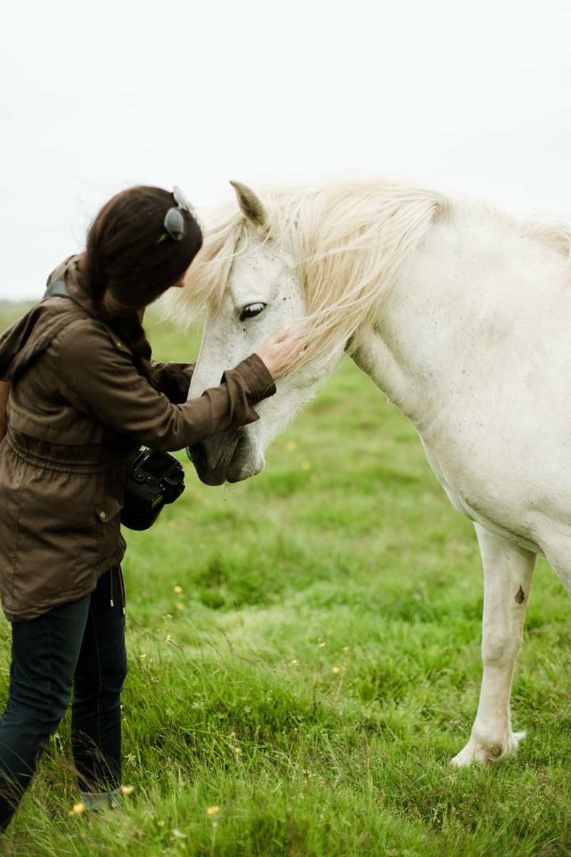 Horses in Iceland by Abigail Lauren now on Cottage Hill19.jpg