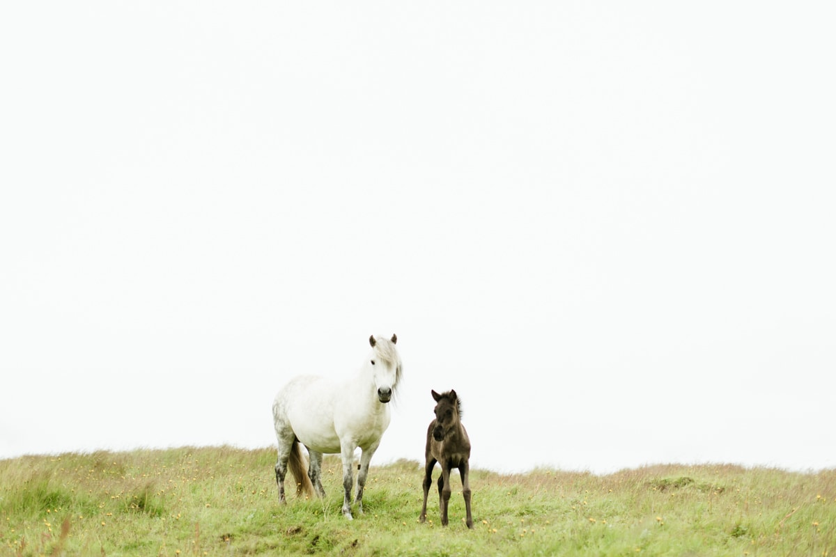 Horses in Iceland by Abigail Lauren now on Cottage Hill22.jpg