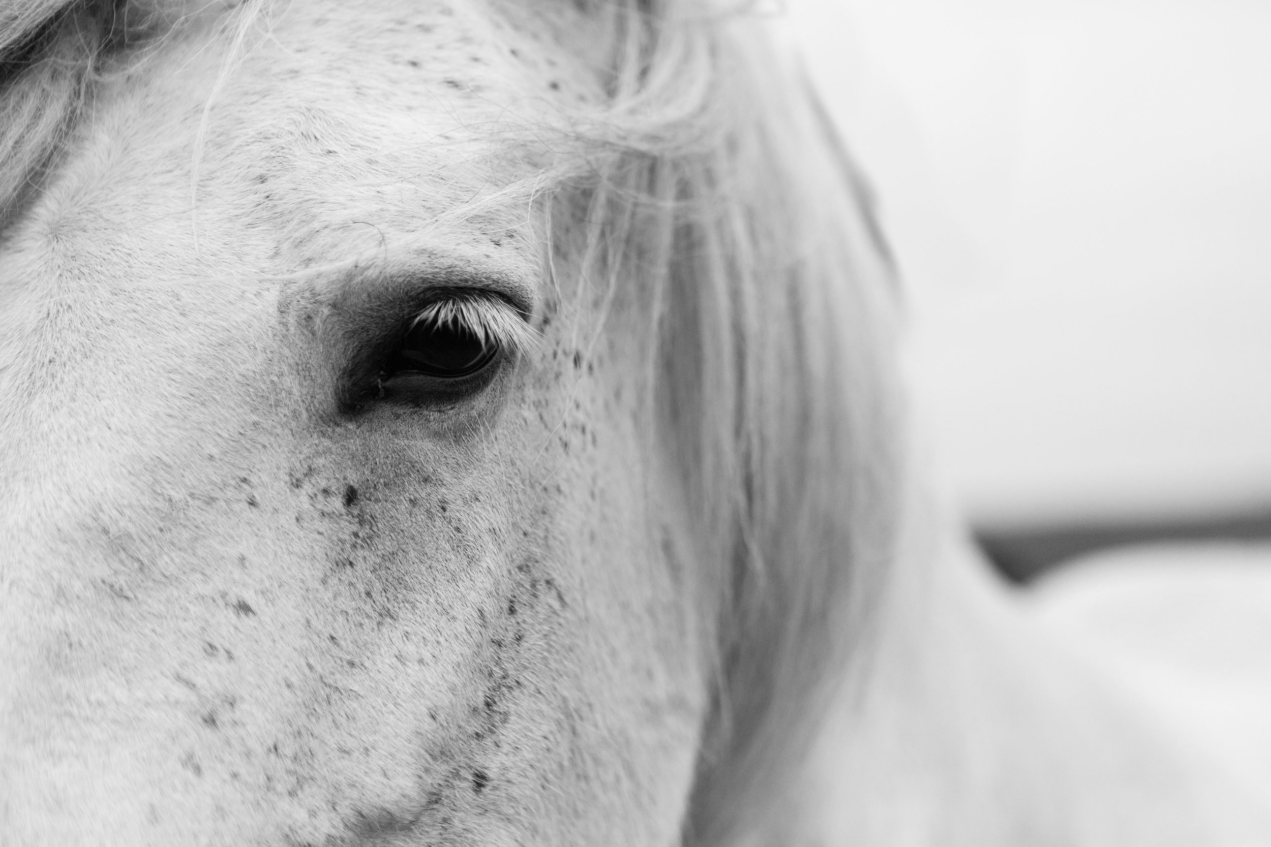 Horses in Iceland by Jen Madigan now on Cottage Hill3.jpg