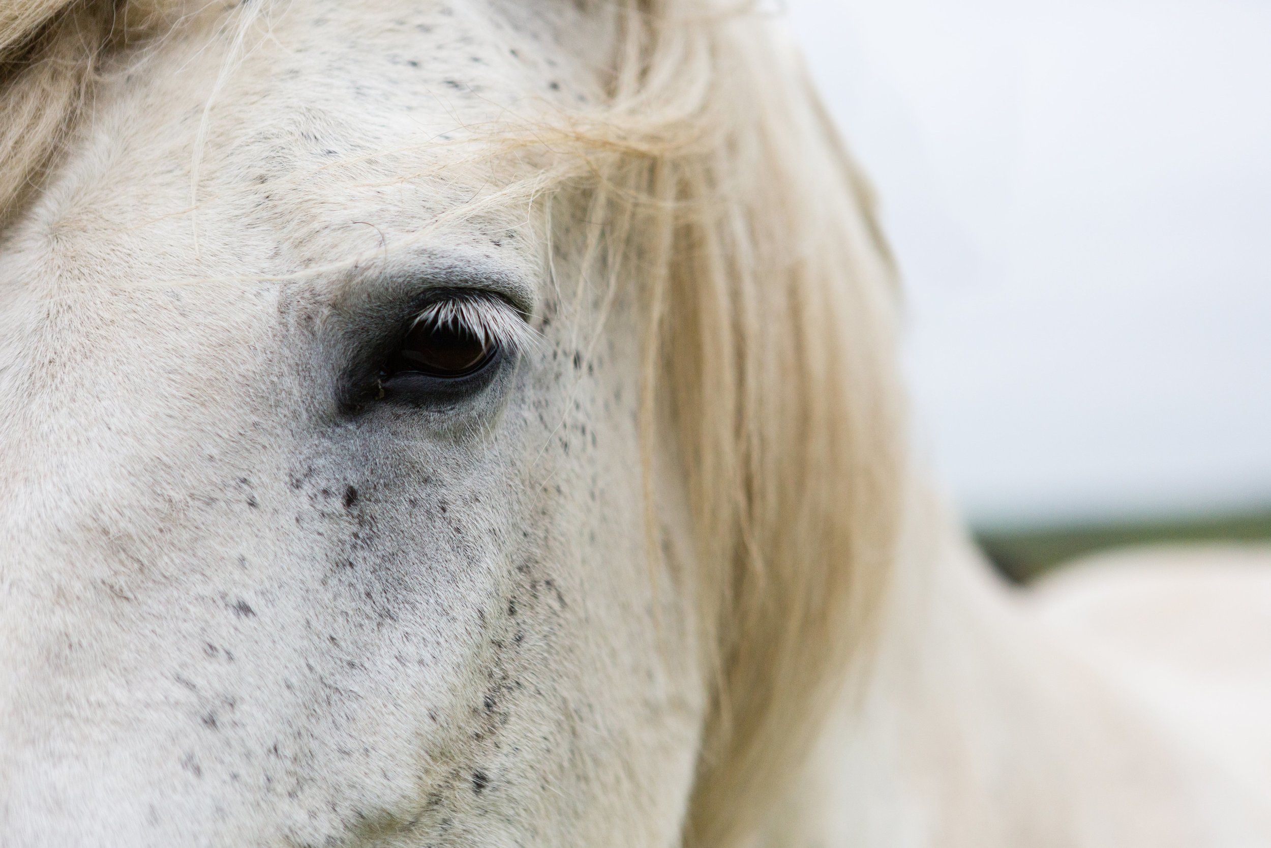 Horses in Iceland by Jen Madigan now on Cottage Hill4.jpg