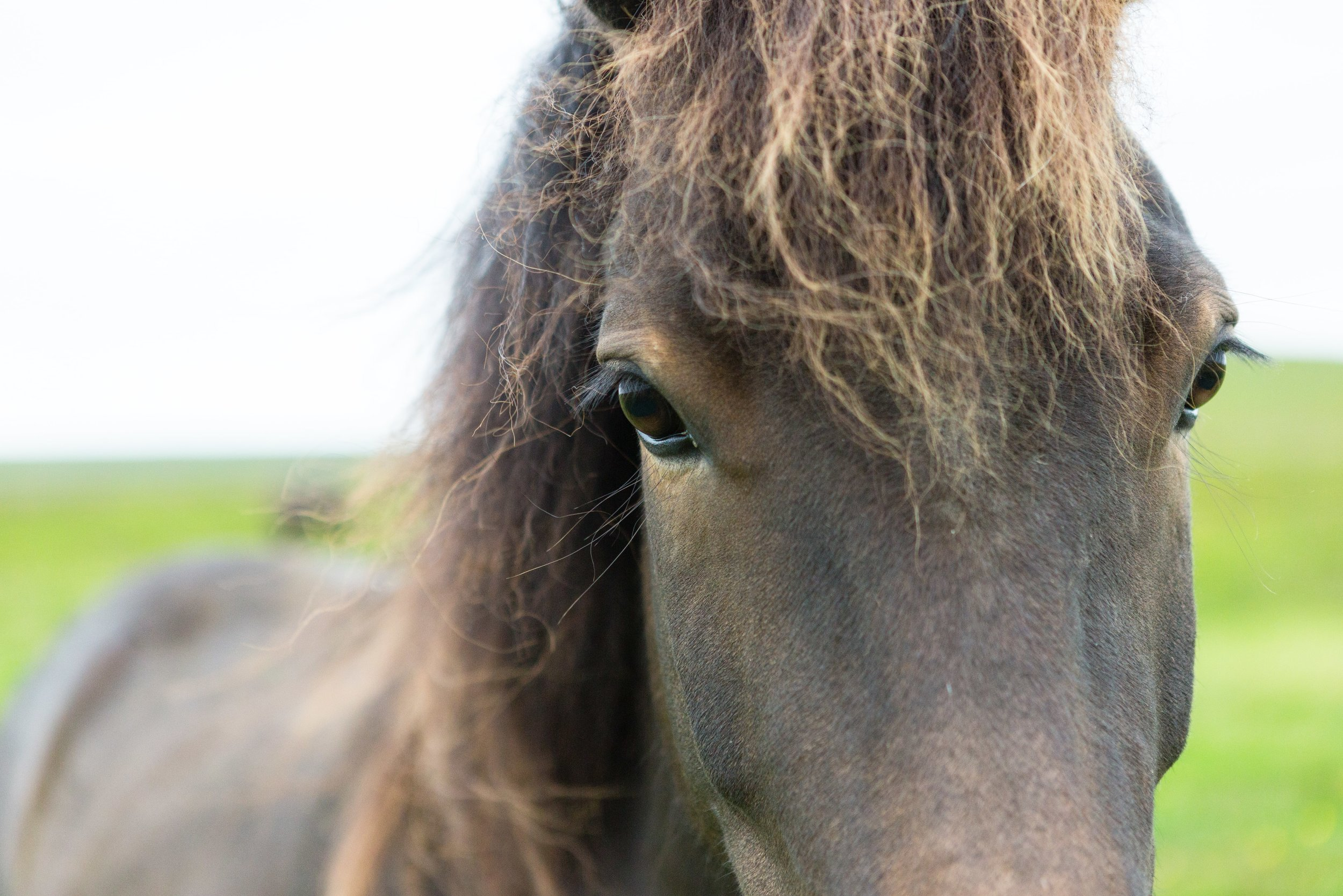 Horses in Iceland by Jen Madigan now on Cottage Hill7.jpg