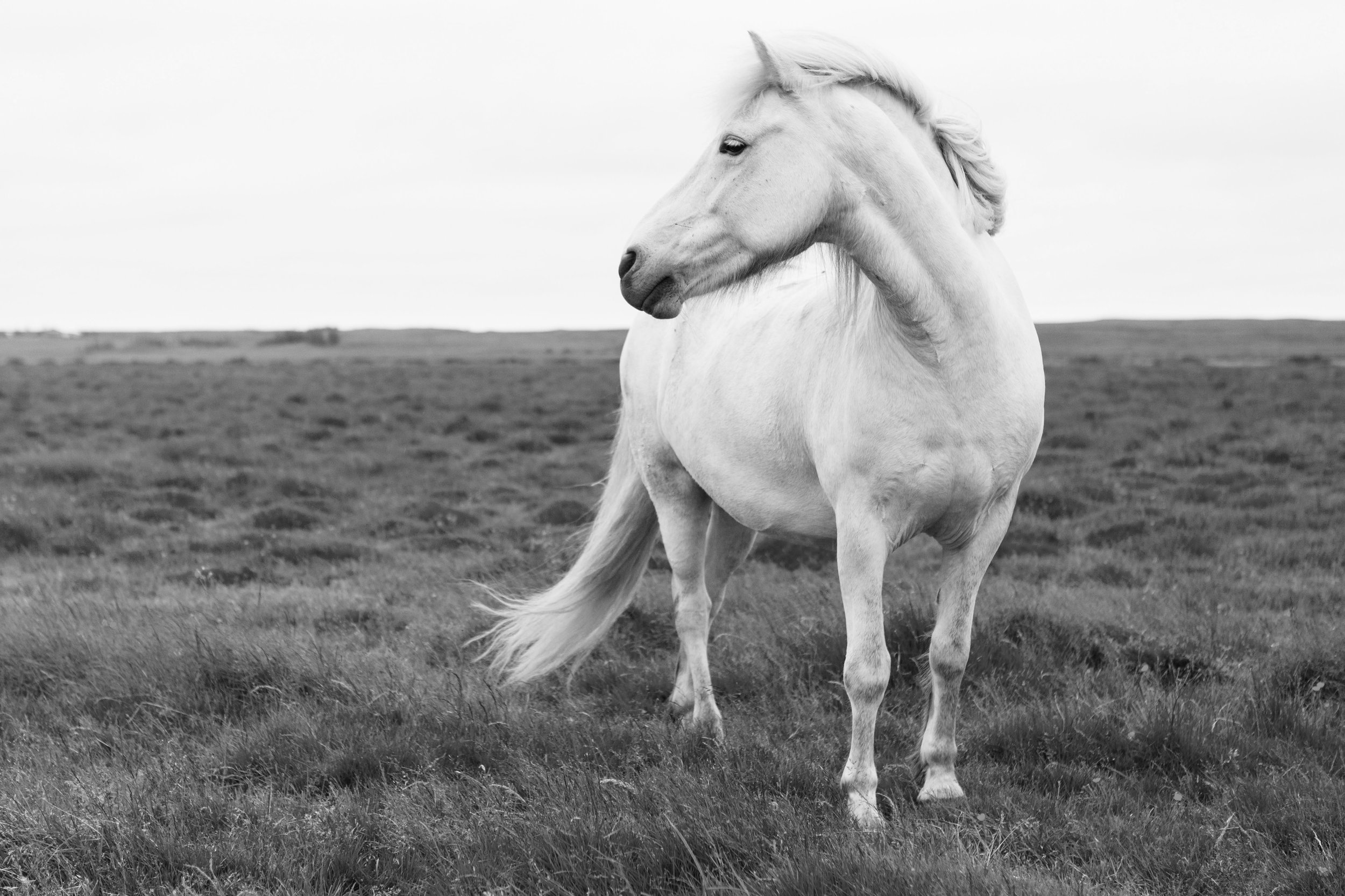Horses in Iceland by Jen Madigan now on Cottage Hill9.jpg
