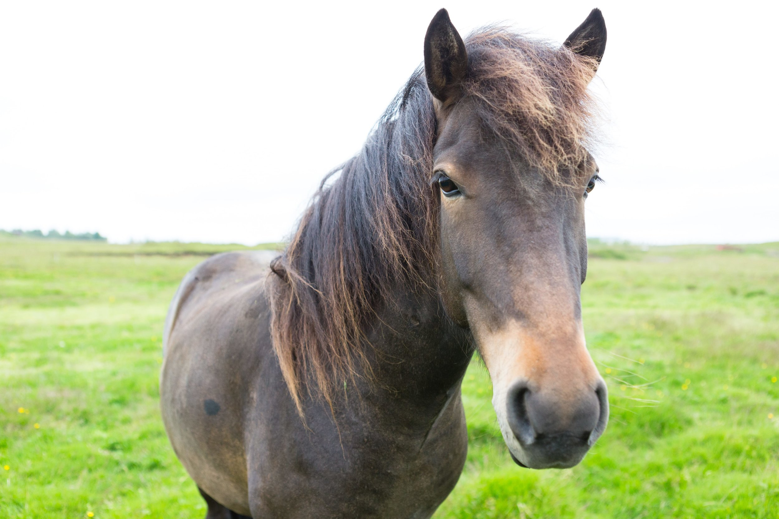 Horses in Iceland by Jen Madigan now on Cottage Hill17.jpg